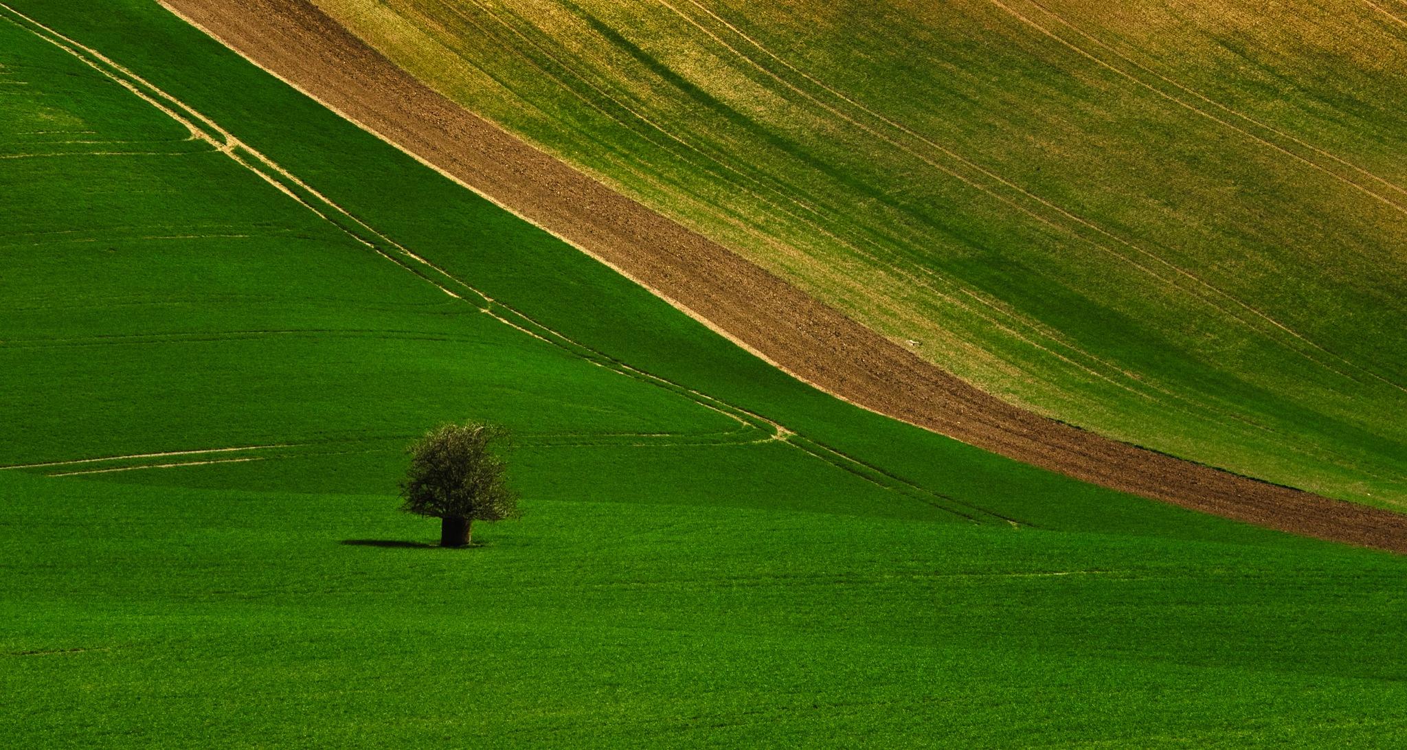 Springtime in Moravia by Adi Gli