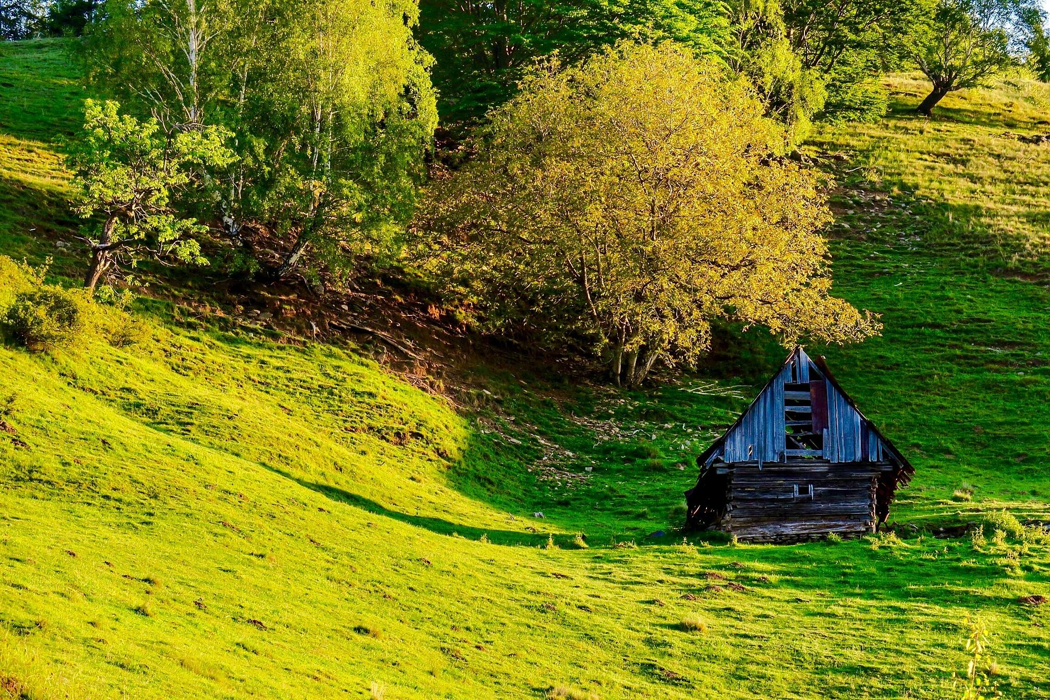 Morning in green and yellow  by Adi Gli