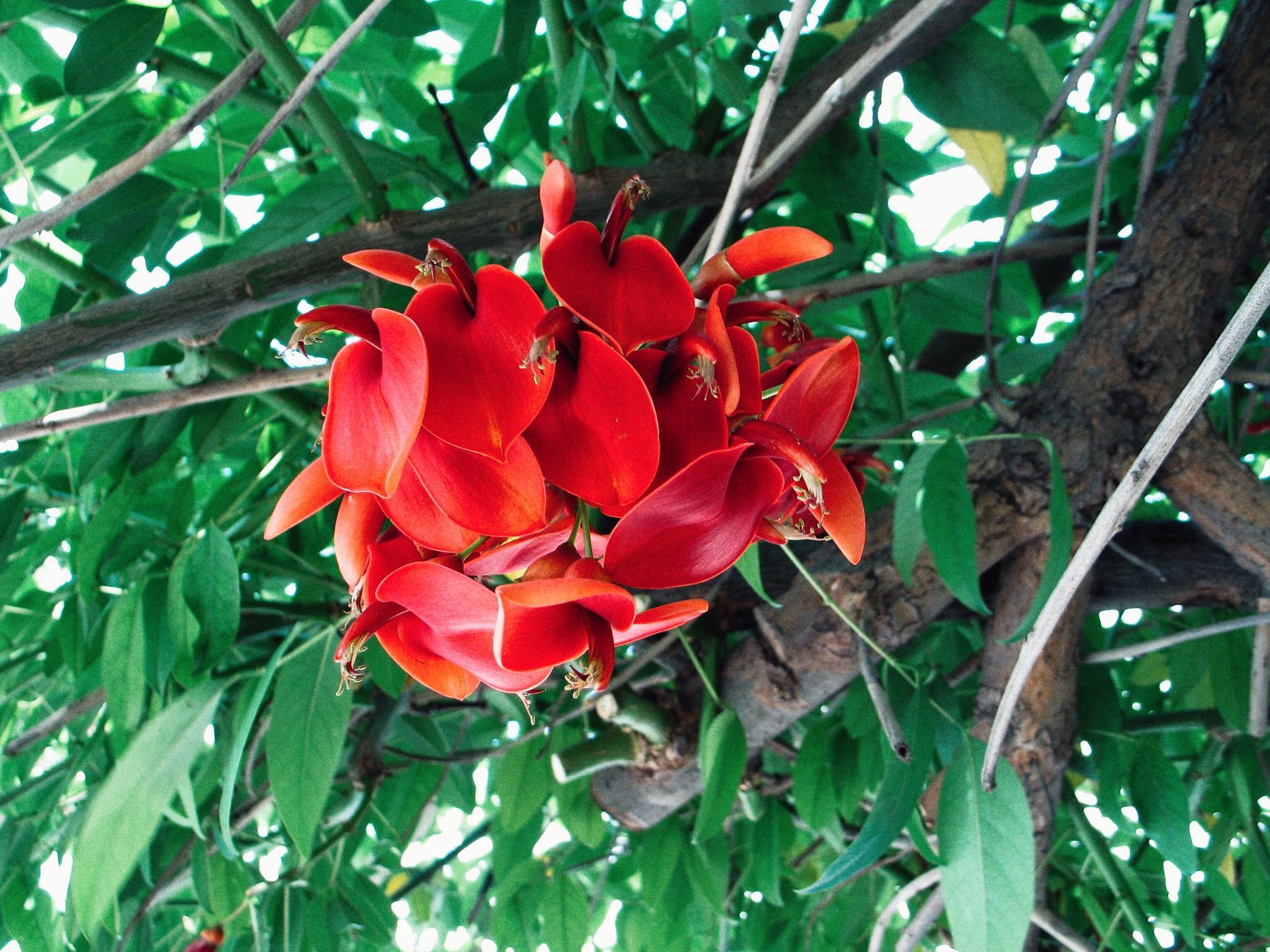 Red flowers in Napoli by Adi Gli