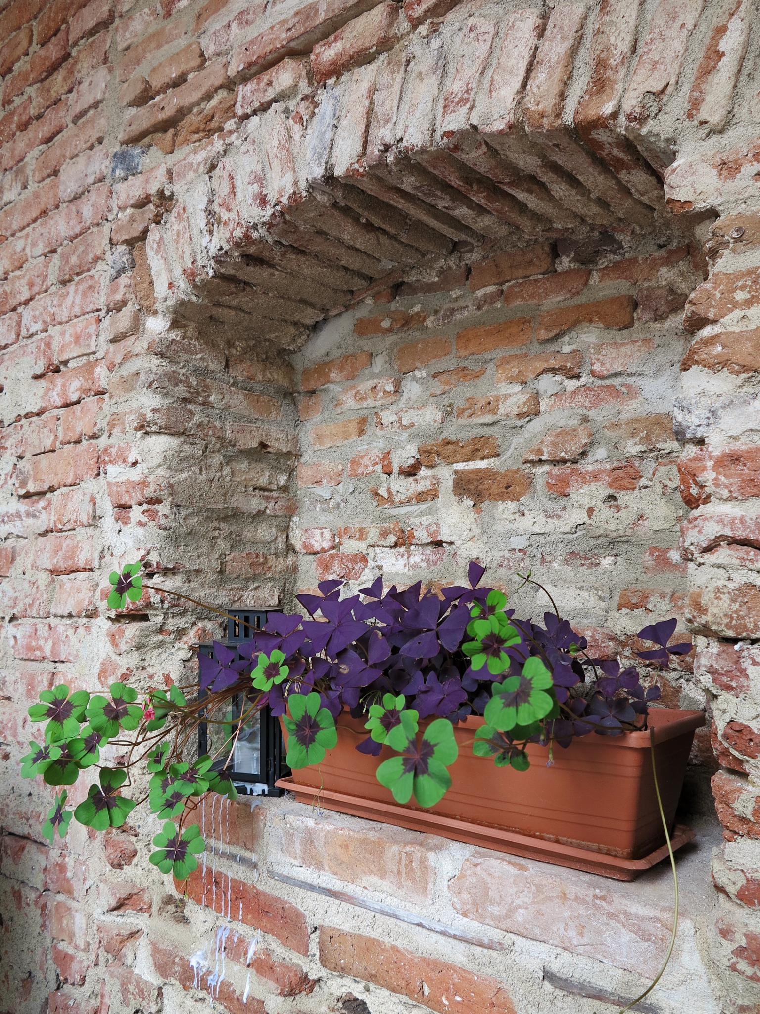 Bricks & Flowers  by Adi Gli