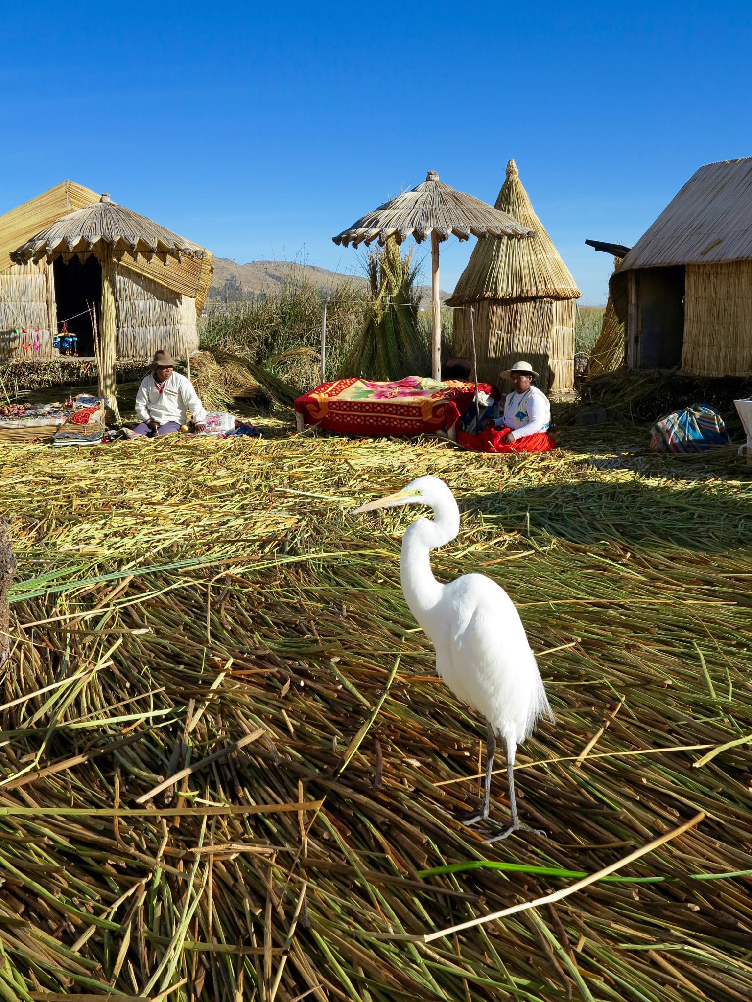 Visitor on floating island,Titicaca Lake,Peru by Adi Gli