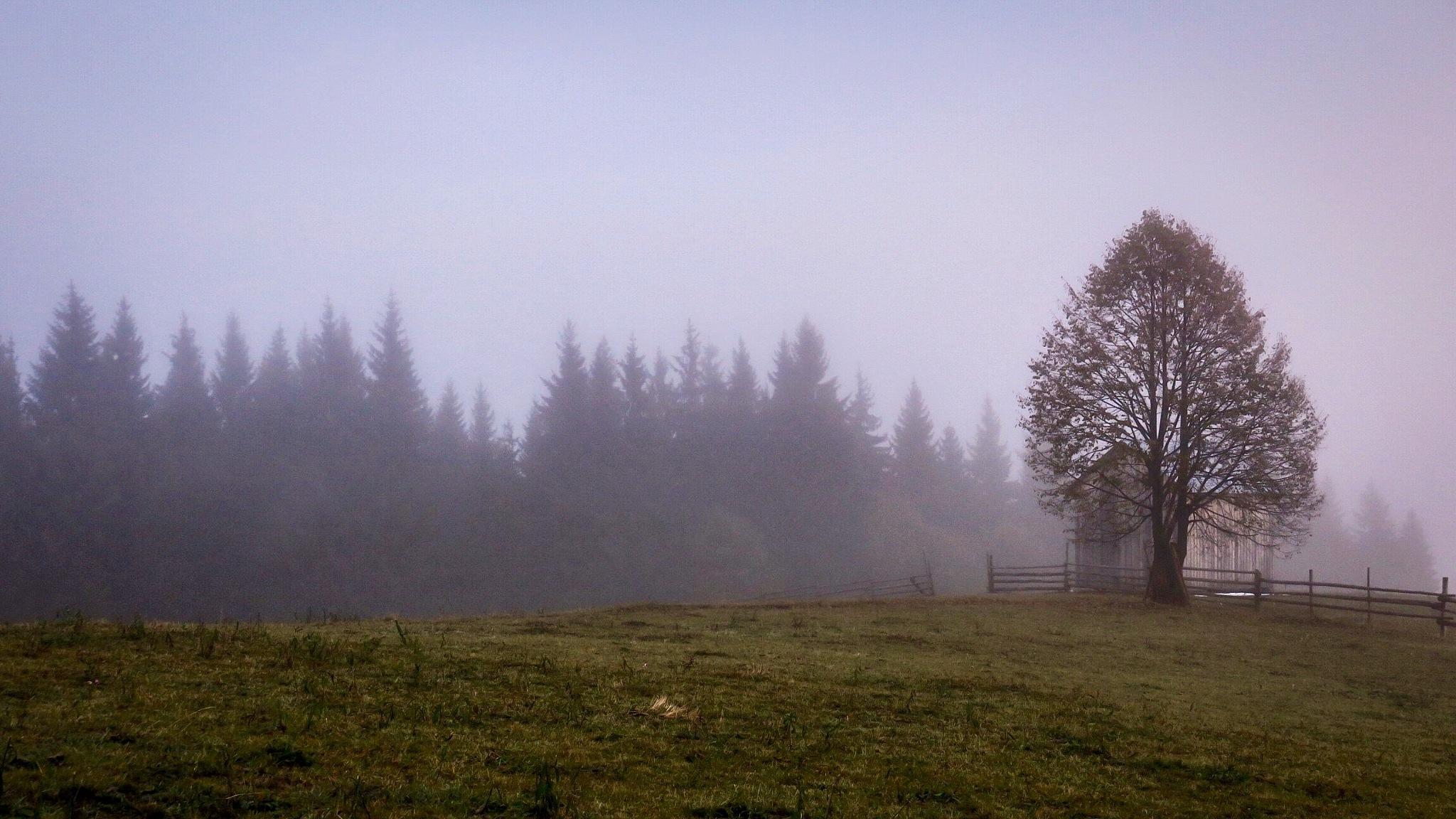 Foggy morning by Adi Gli
