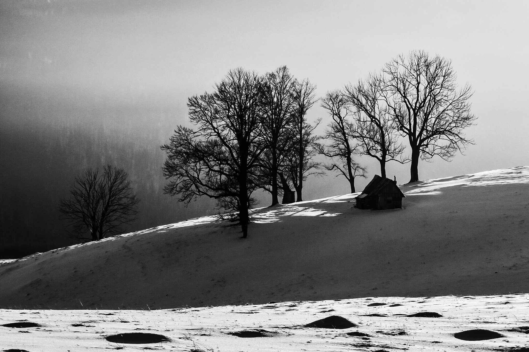 Winter in B&W by Adi Gli