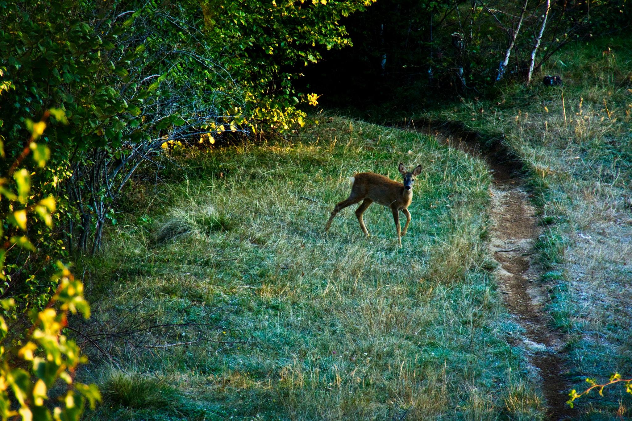 the deer by Adi Gli