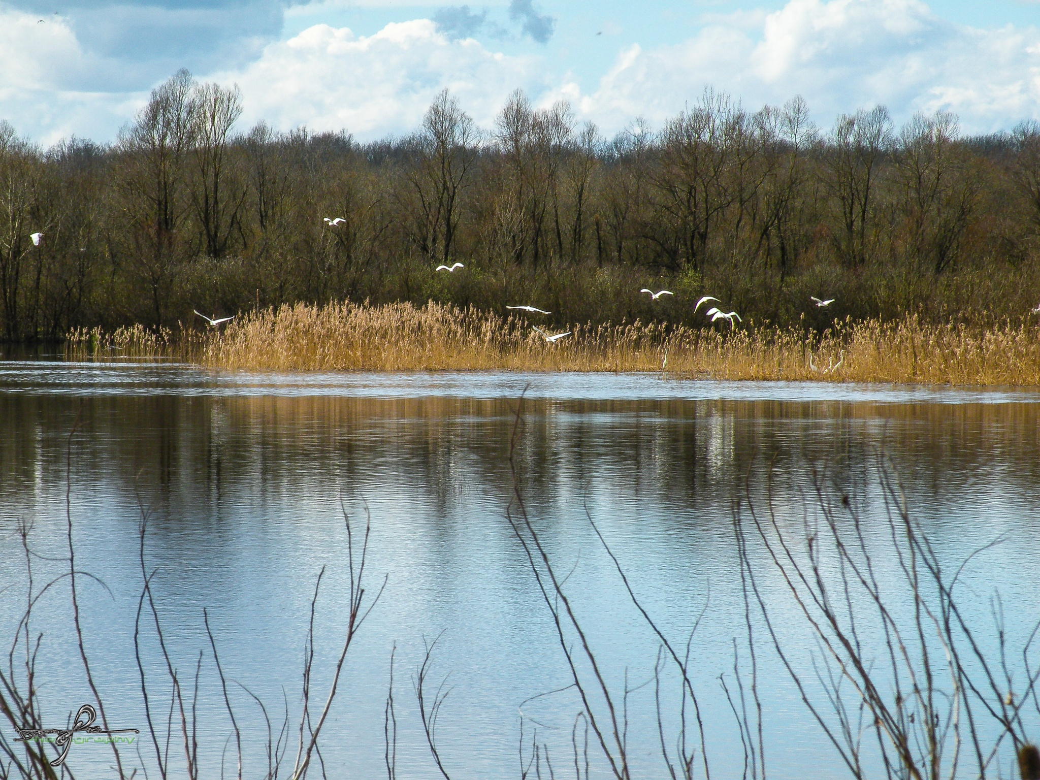 lake by Robert