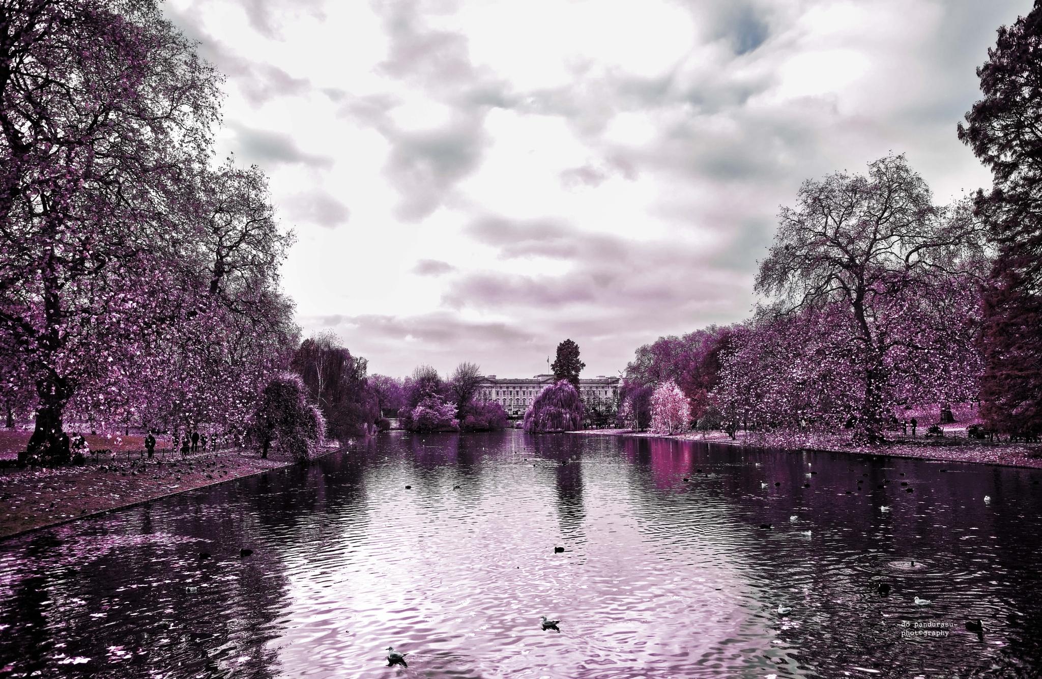 St James Park by do pandurasu photography