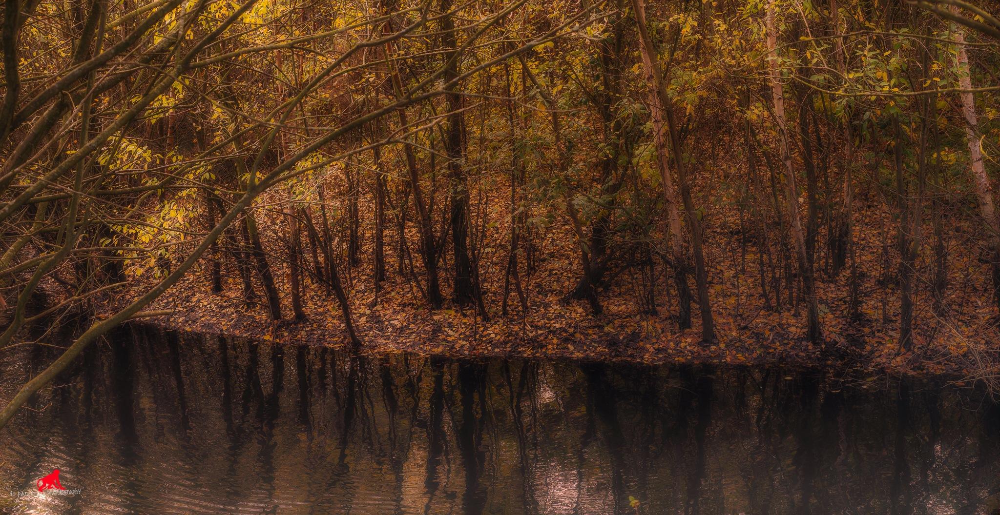 Fall ref by do pandurasu photography
