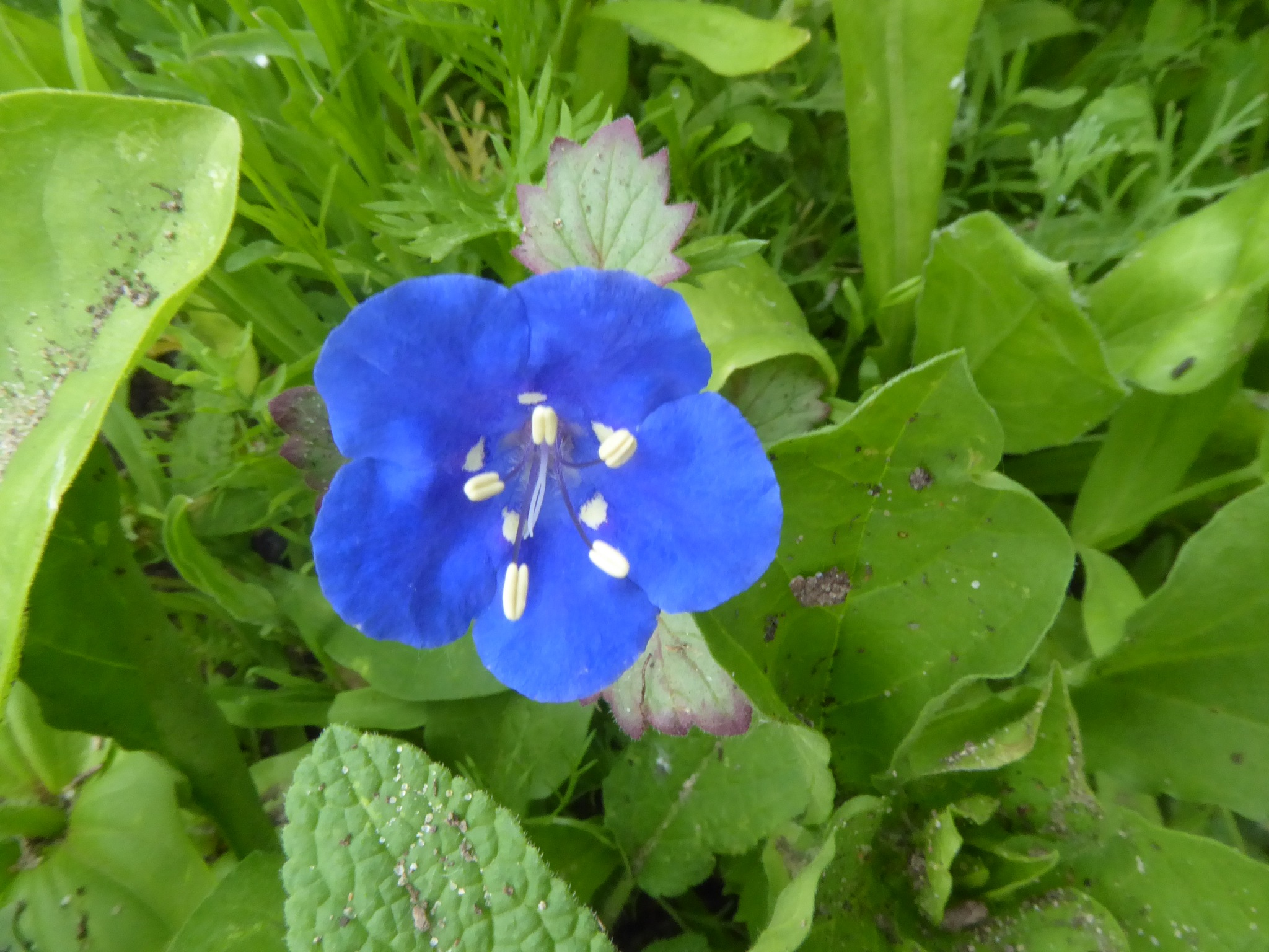 wonderfull blue bloom by Norbert Reiss