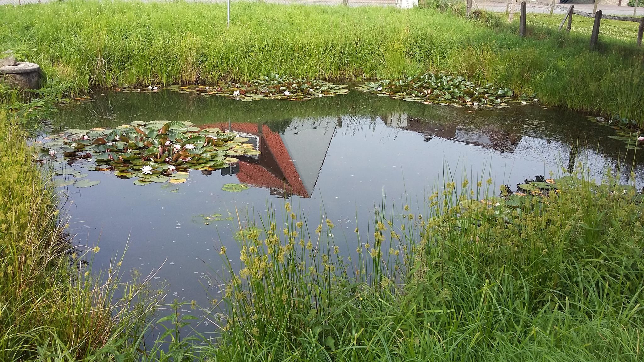Fire pond by Norbert Reiss