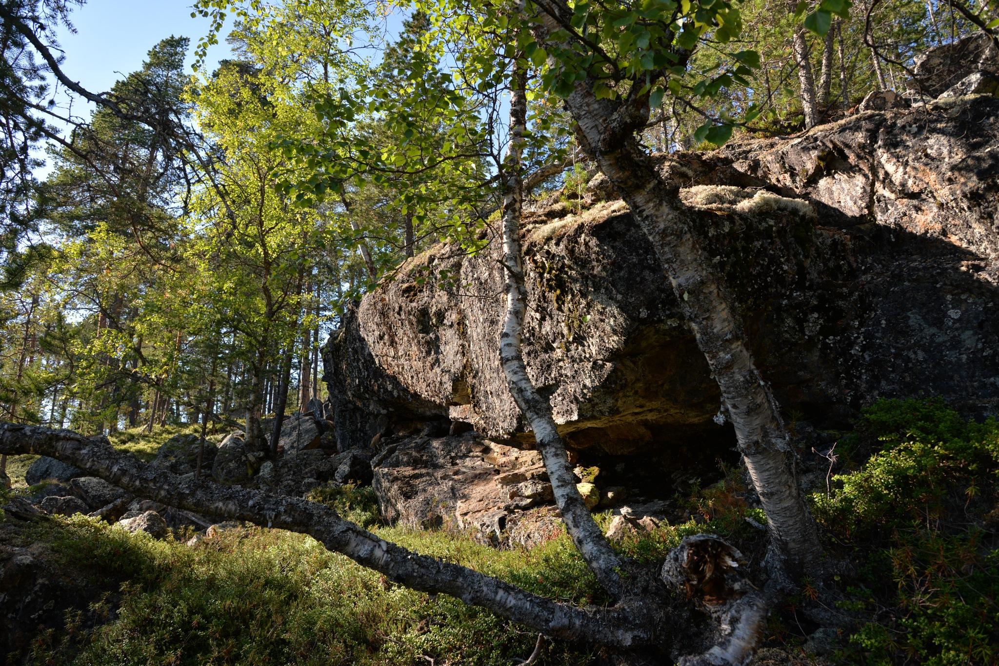 Forest by HeikkiHAtMAN PHOTOGRAPHY