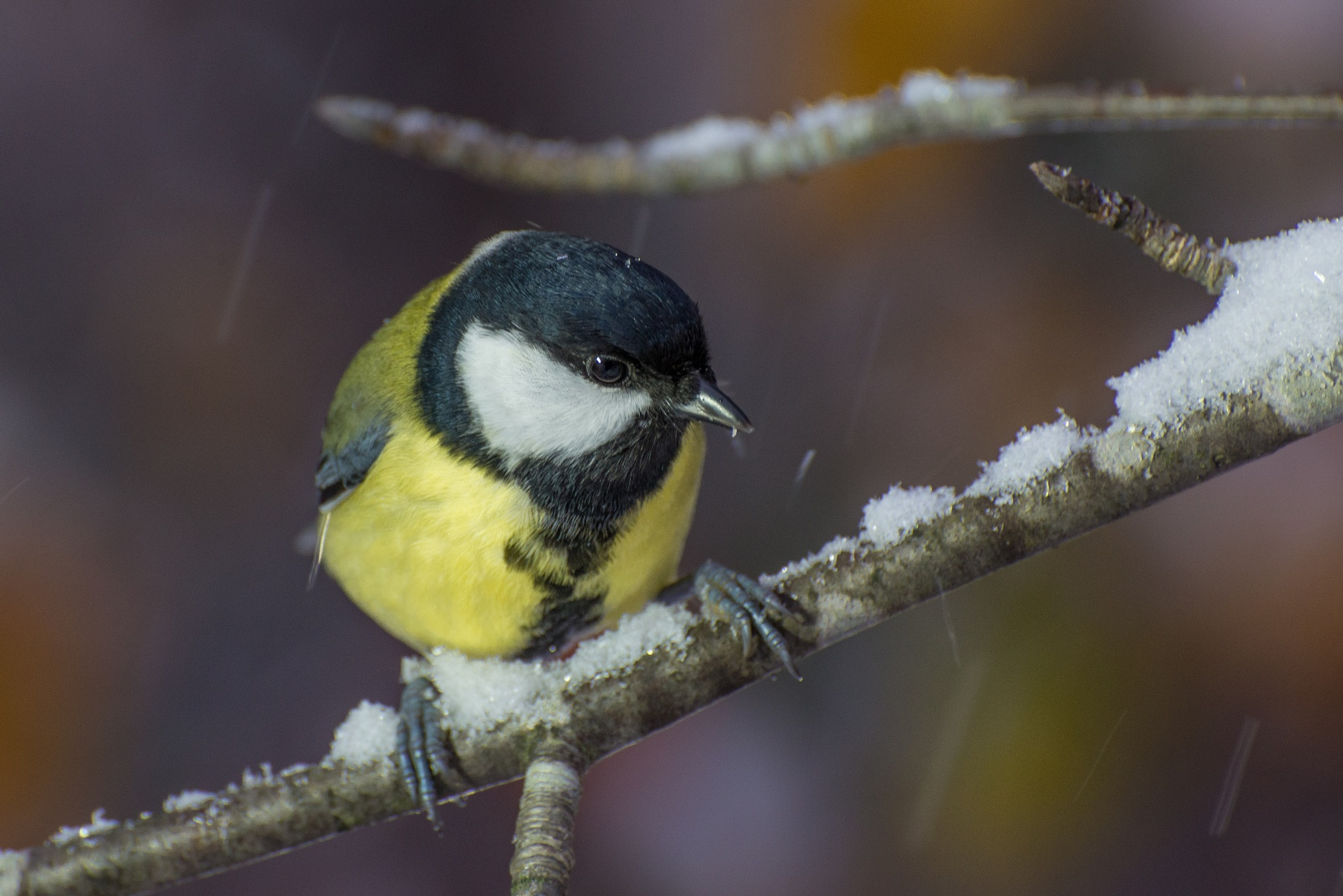 Snowing by HeikkiHAtMAN PHOTOGRAPHY