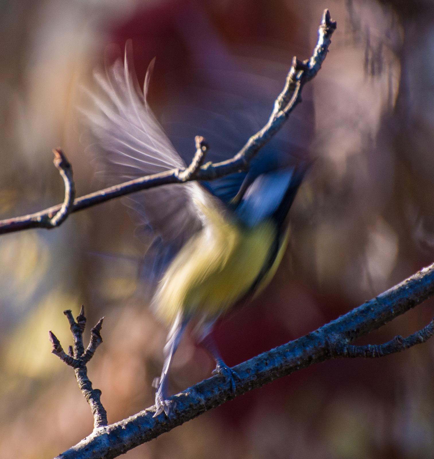 Fly by HeikkiHAtMAN PHOTOGRAPHY