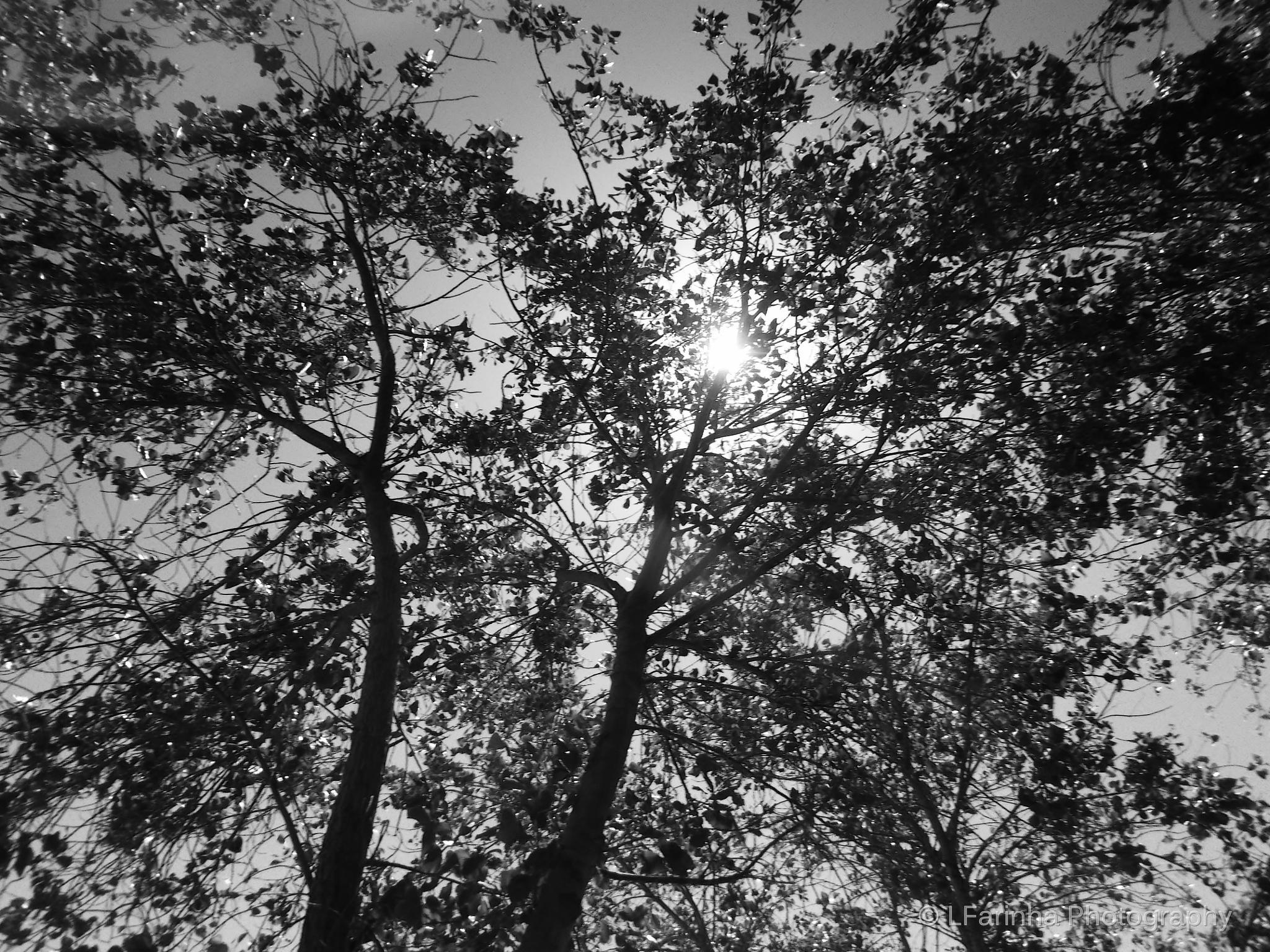 Silhouette nature.. by LFarinha Photography