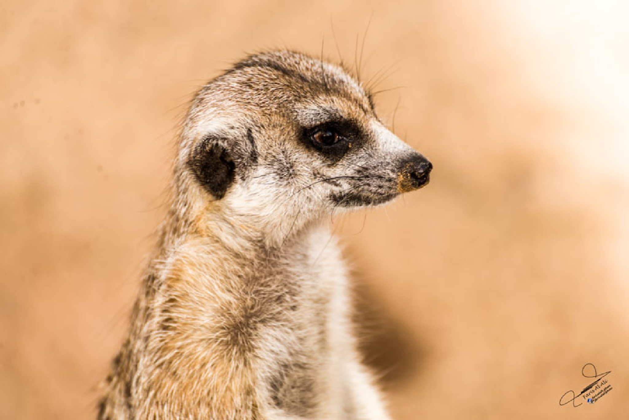 Animal Photography by farisalali.photo