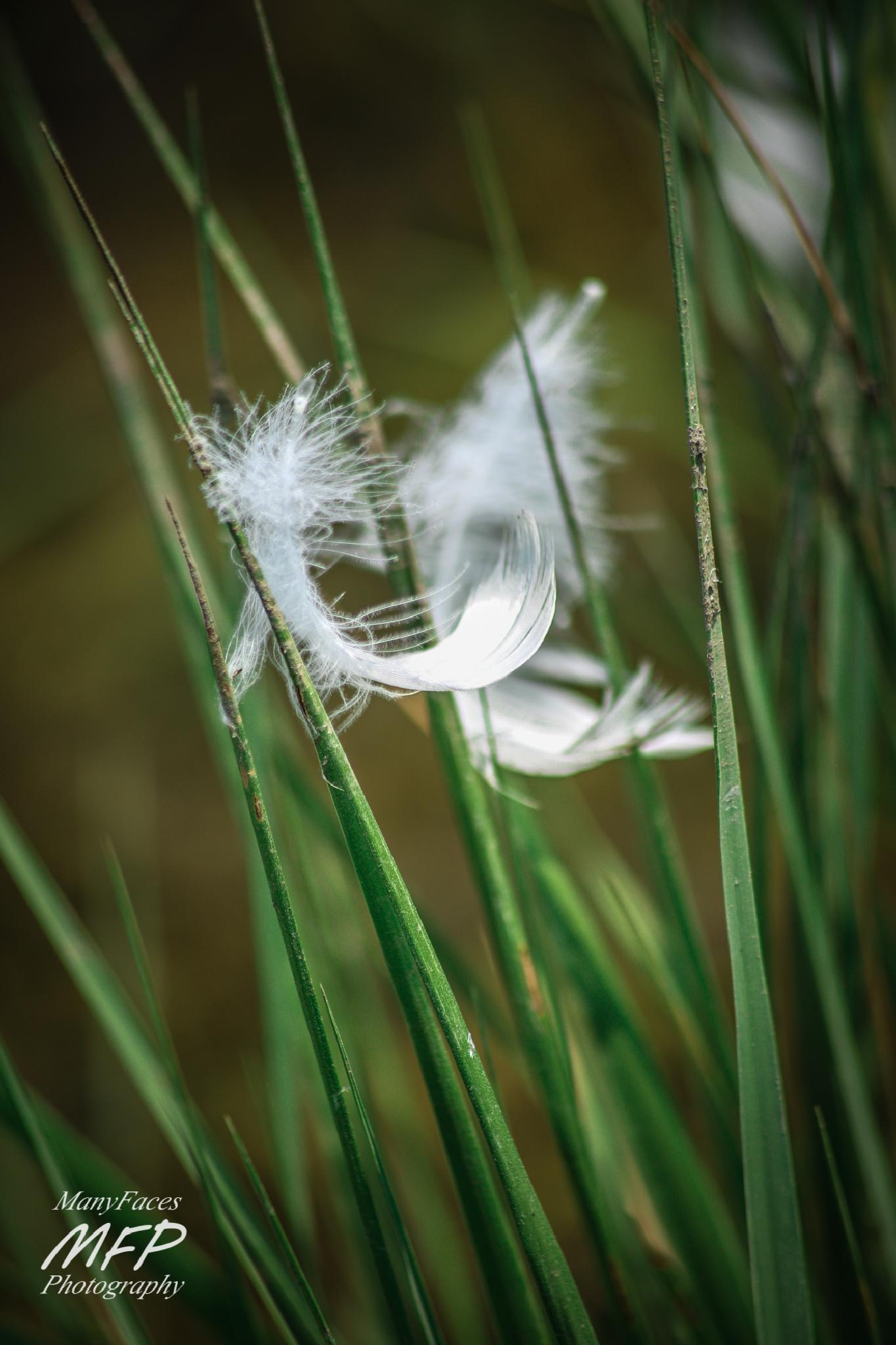 Photo in Sea and Sand #feather #grass #ocean #green