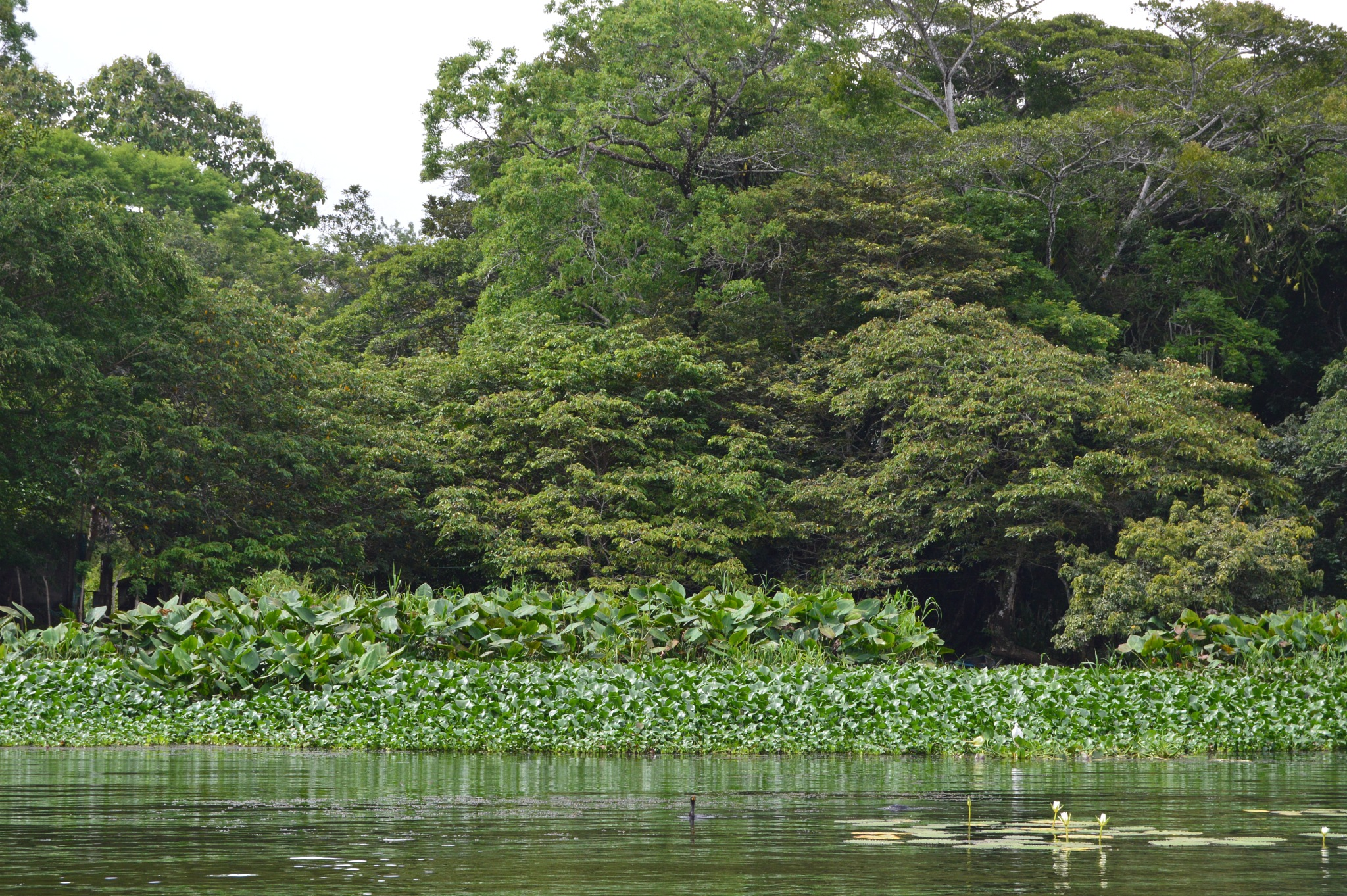 Catemaco Lagoon by gaelgarcia38