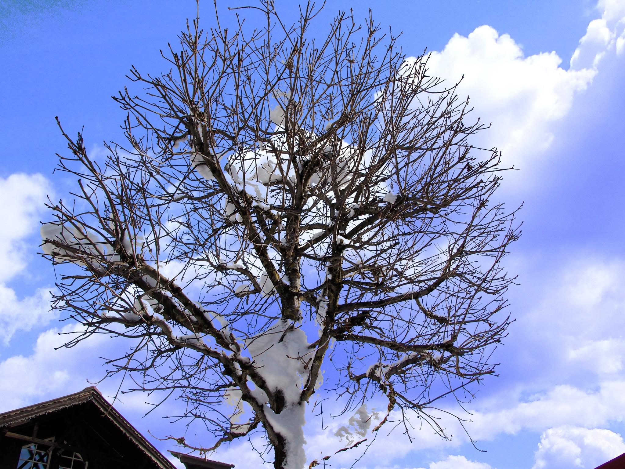 Winter leafs  by Florian B