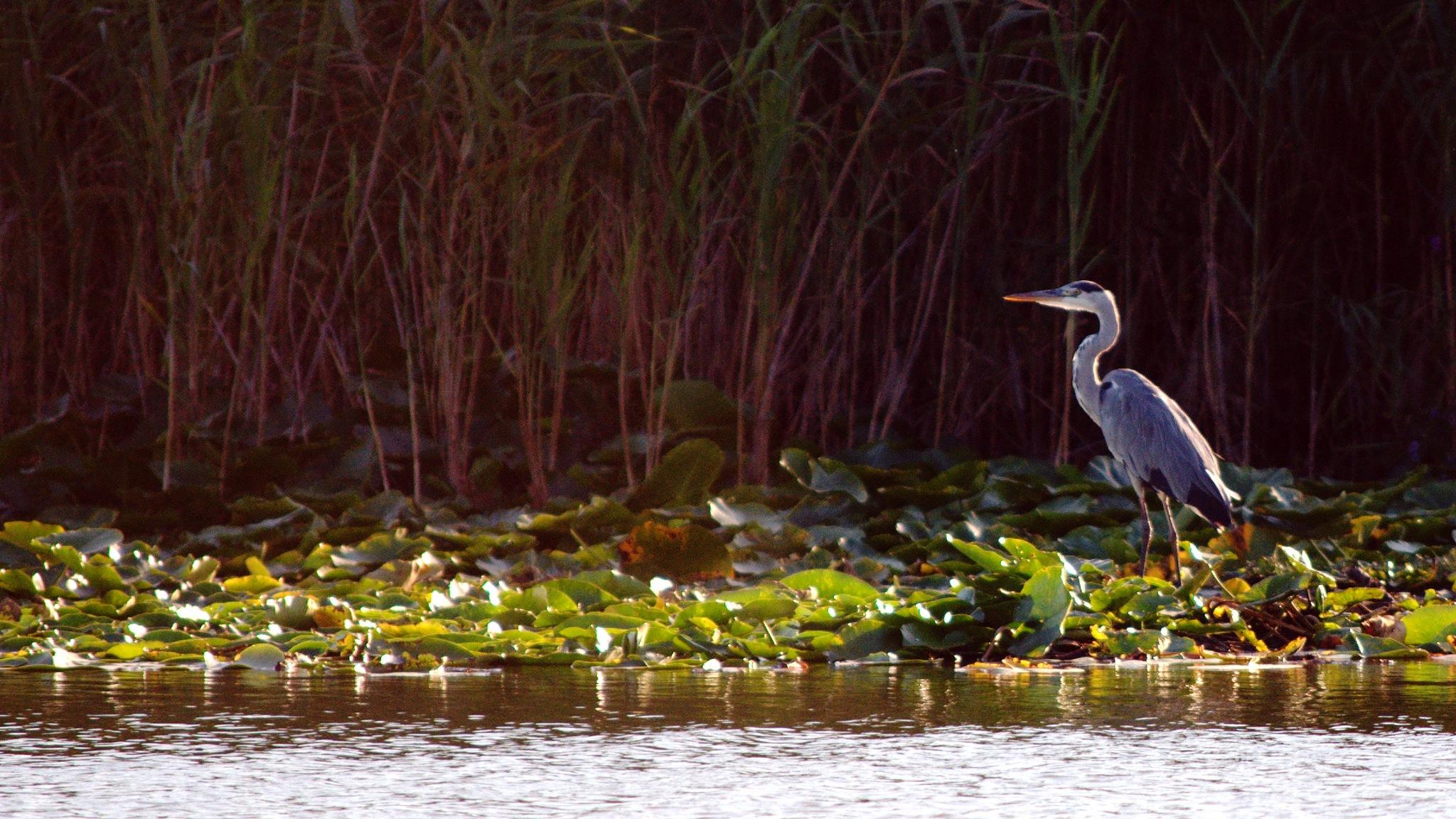Fishing  by Florian B