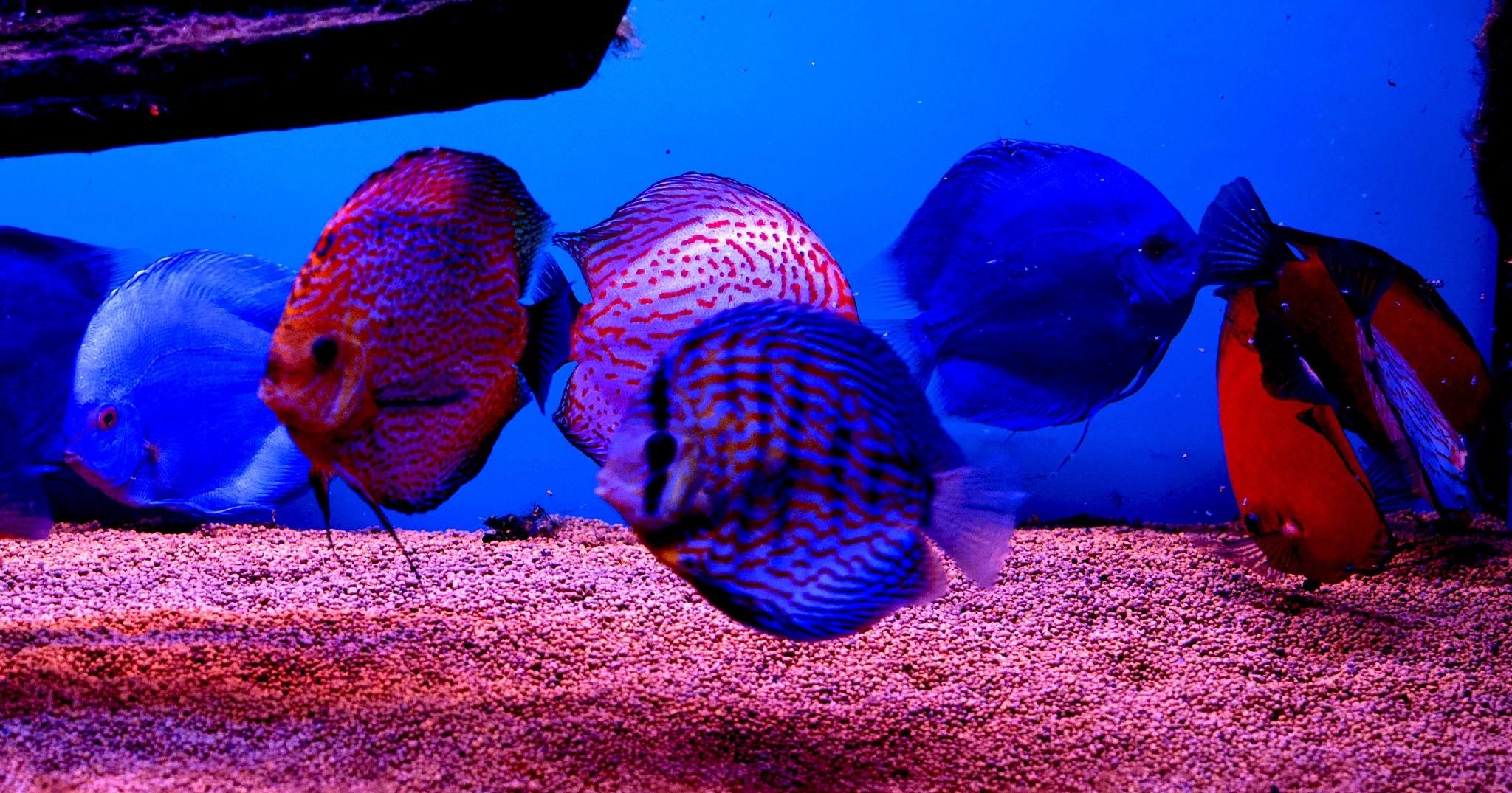 Aquarium 23  by Florian B