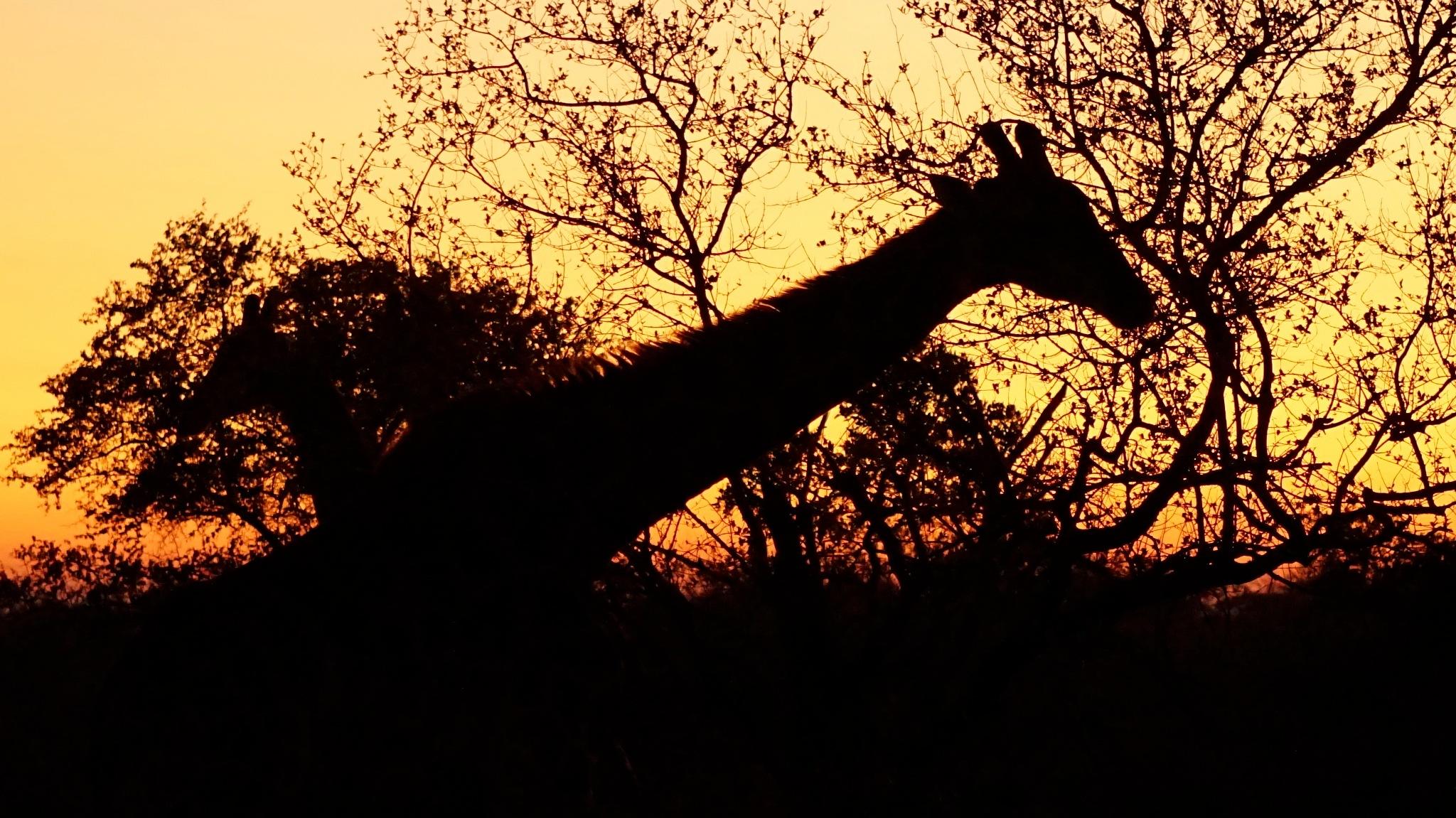 Sunset  by Florian B