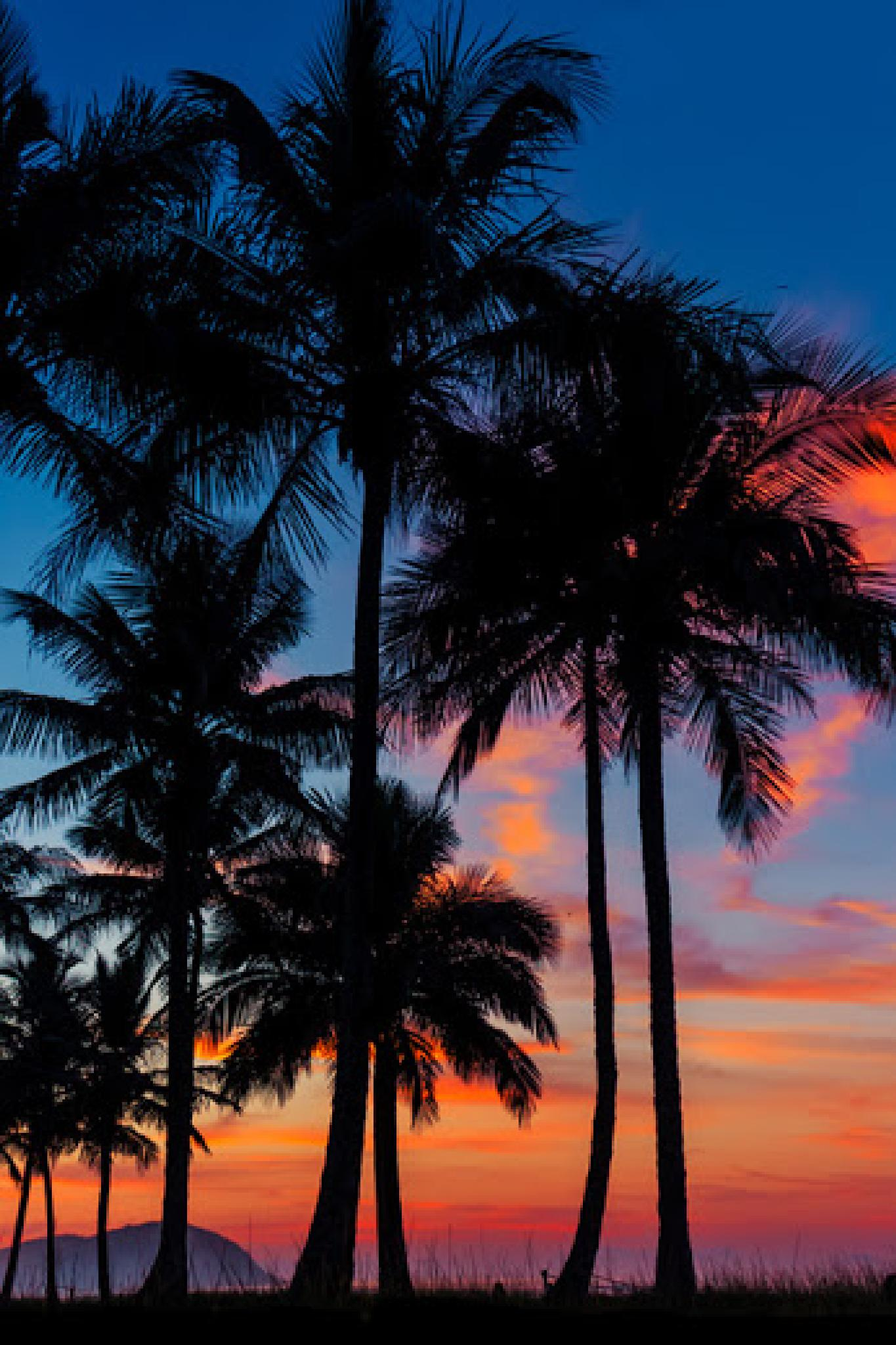 Palms in the Sunset by Serge Kay