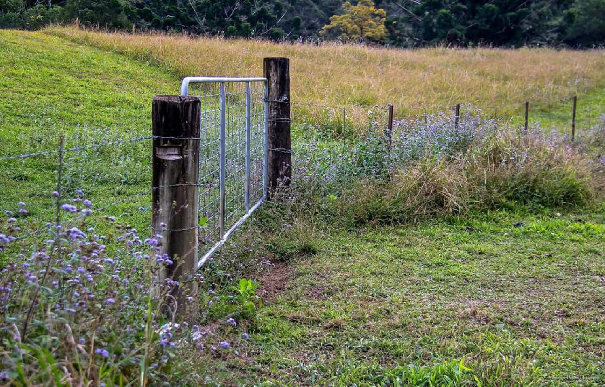 Shut the gate #iloveaustralia #aussiephotos #exploringaustralia #signatureshots_hub by wombatdreaming