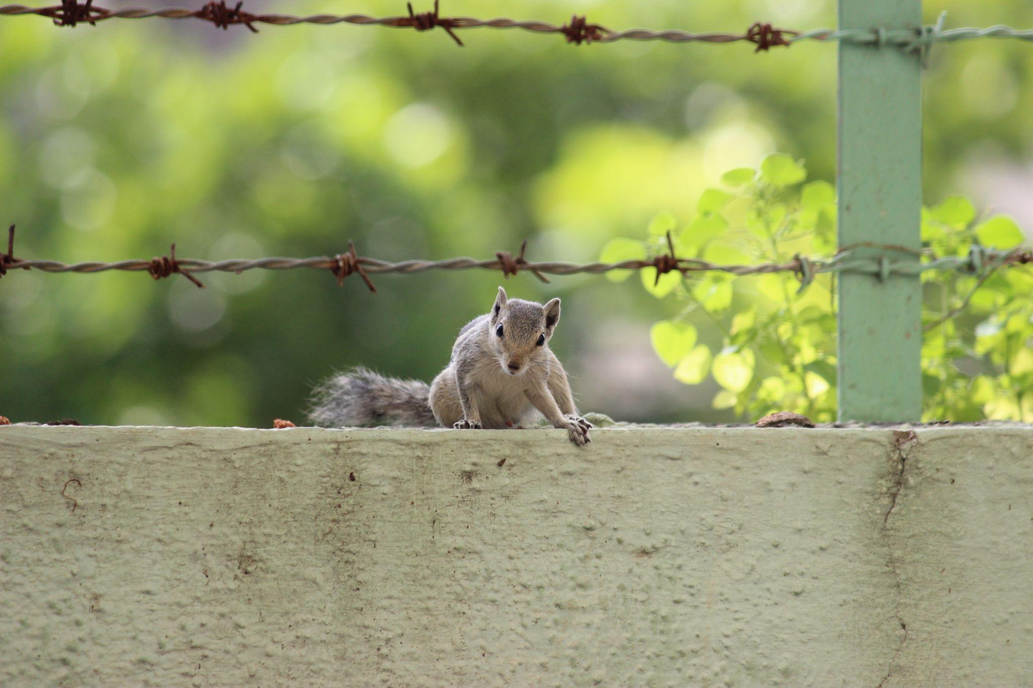 Squirrel, Attentive. by Nirav Mehta