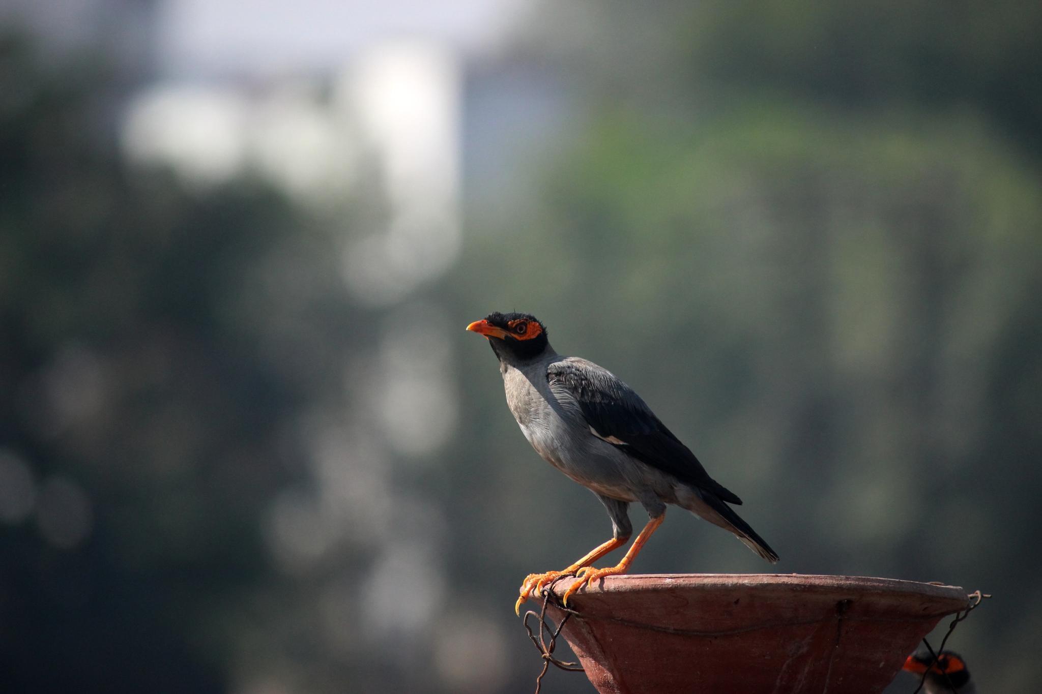 Starling by Nirav Mehta