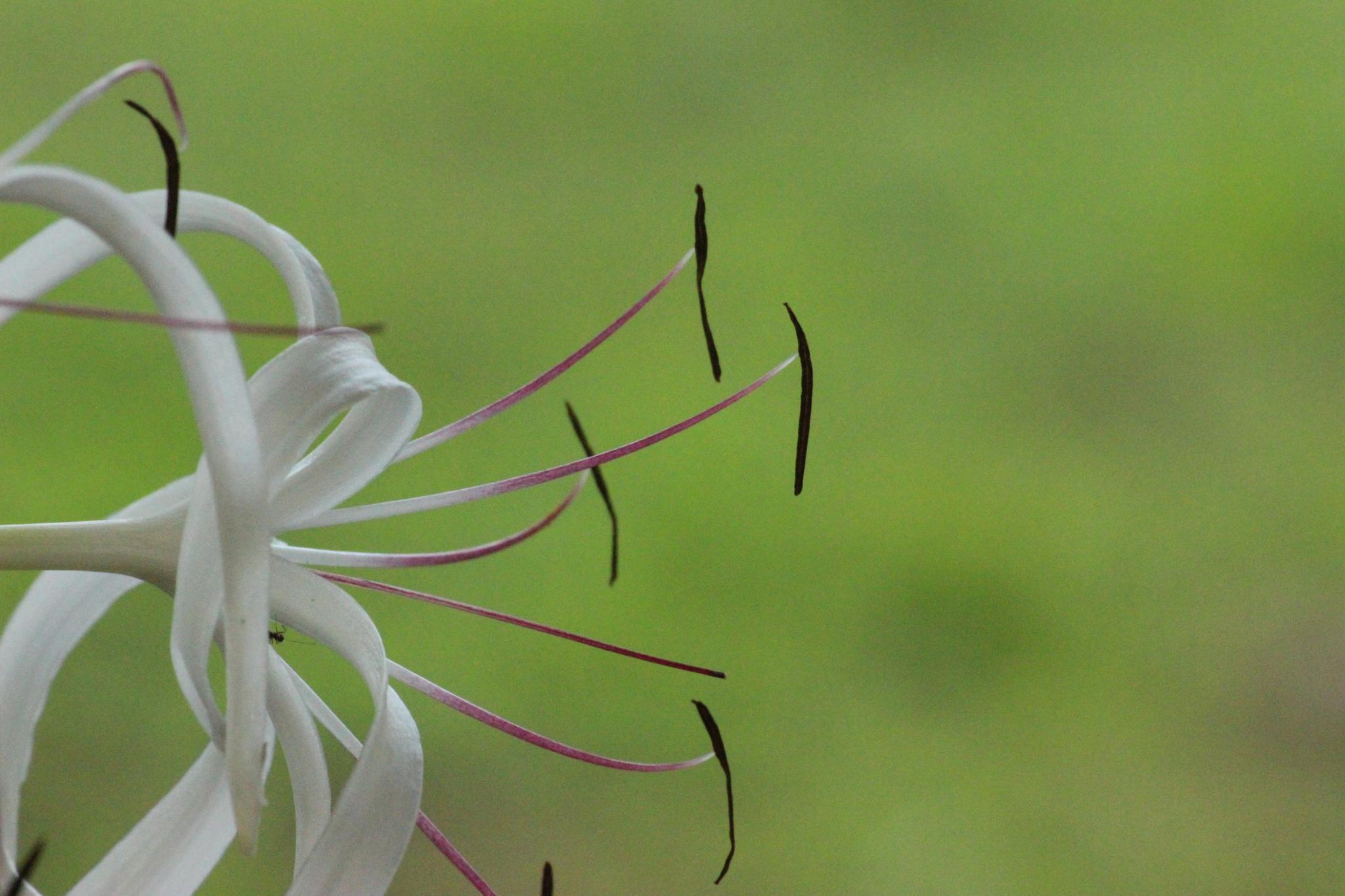Flower by Nirav Mehta