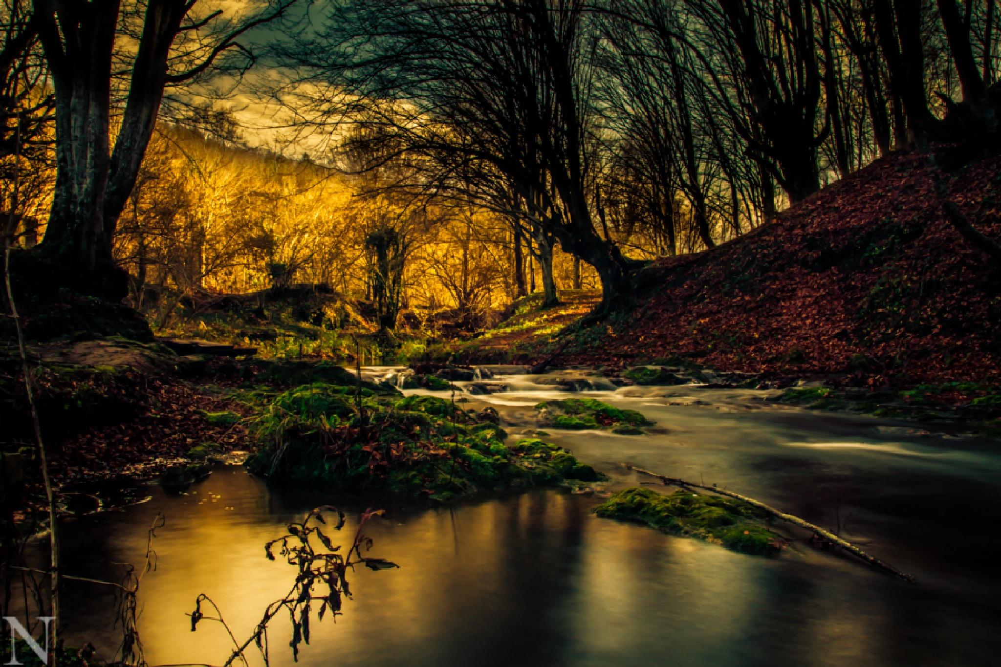 forest by Nikolay Velev