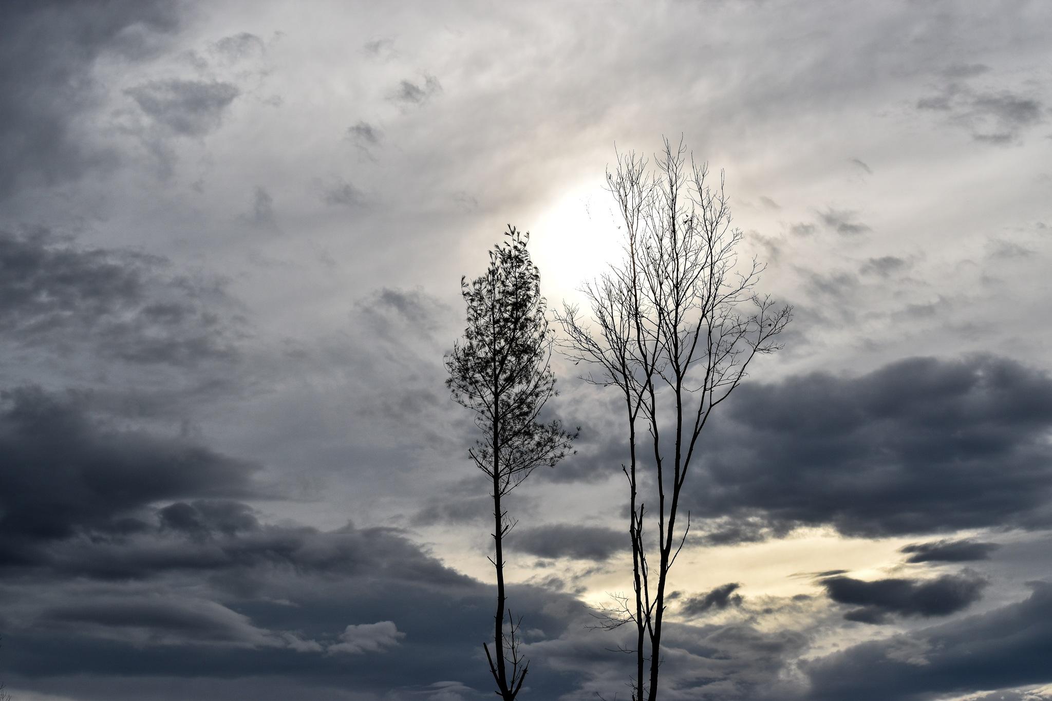 Two Trees by Bonita Loggins