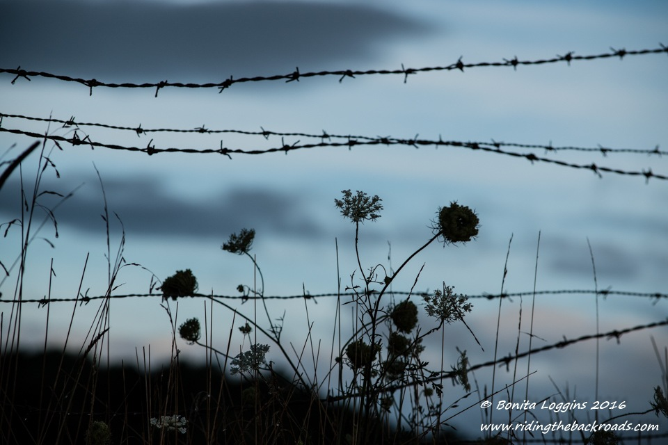 The Fence and Wildflowers by Bonita Loggins