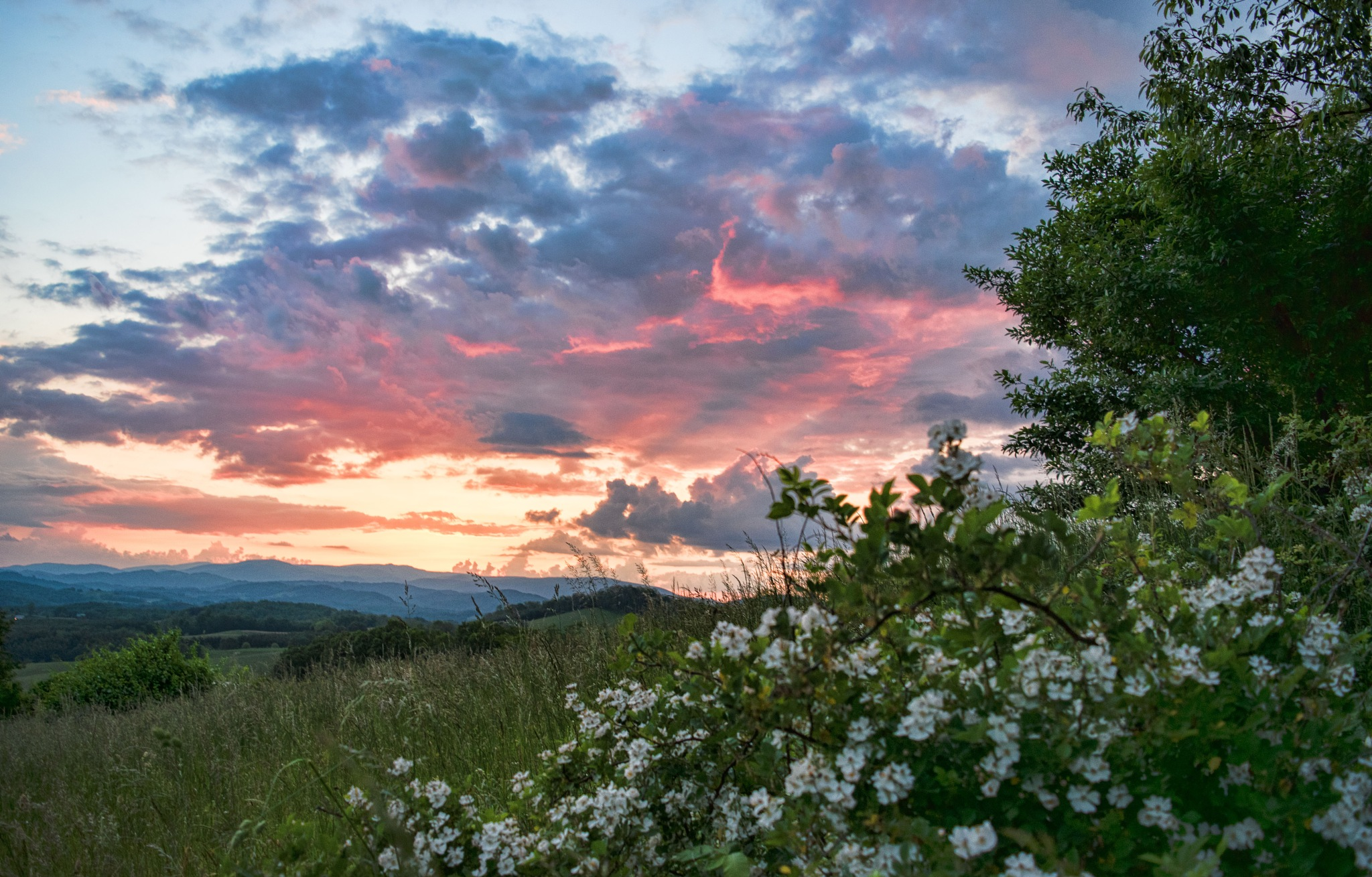 Sunset and Blackberry Blooms by Bonita Loggins