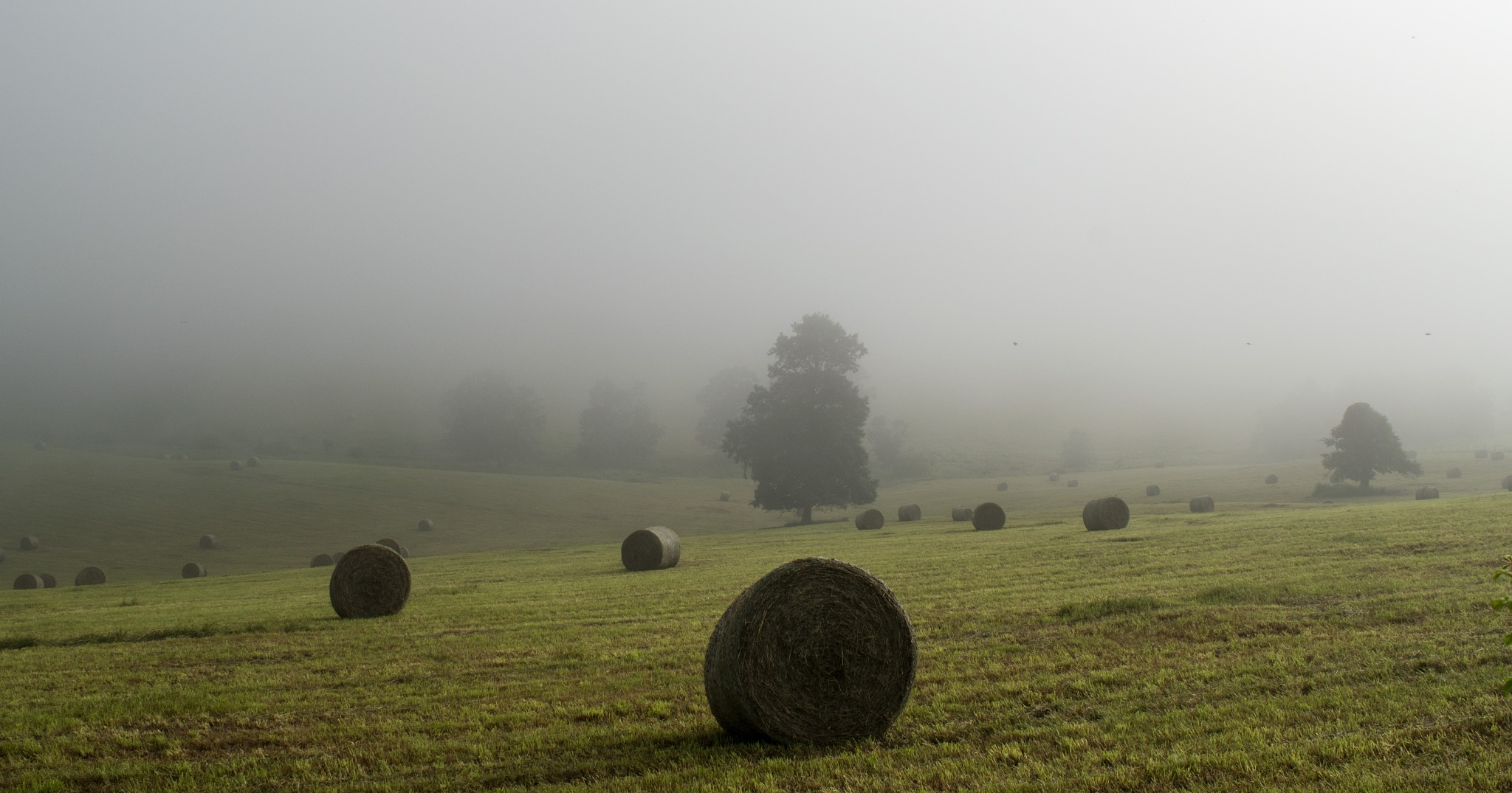 The Fog and the Haybales by Bonita Loggins