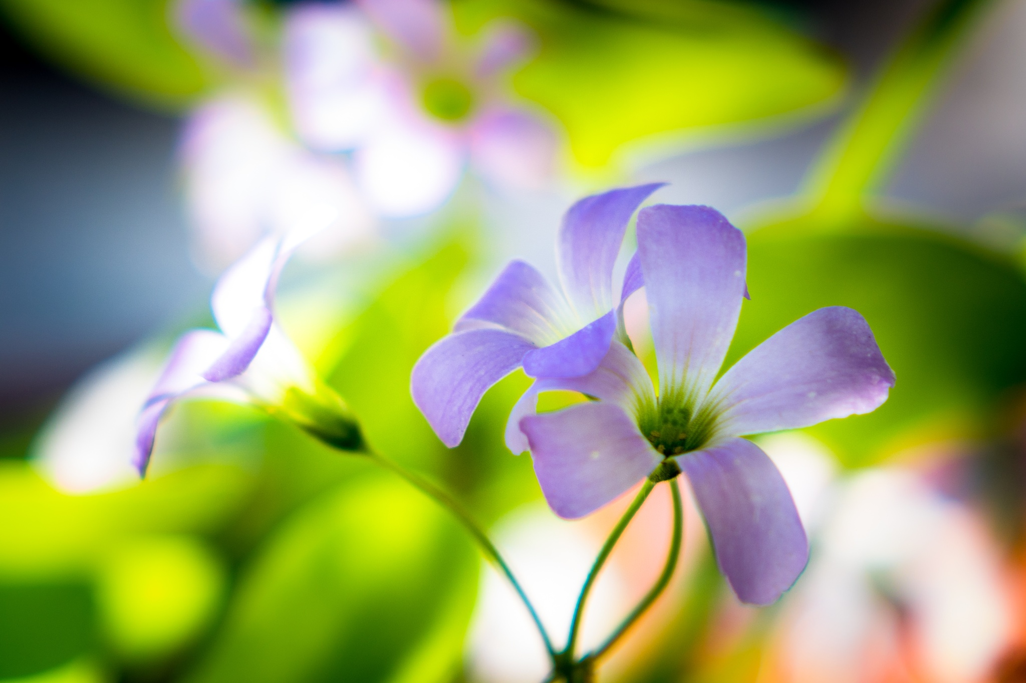 Photo in Nature #flower #natural