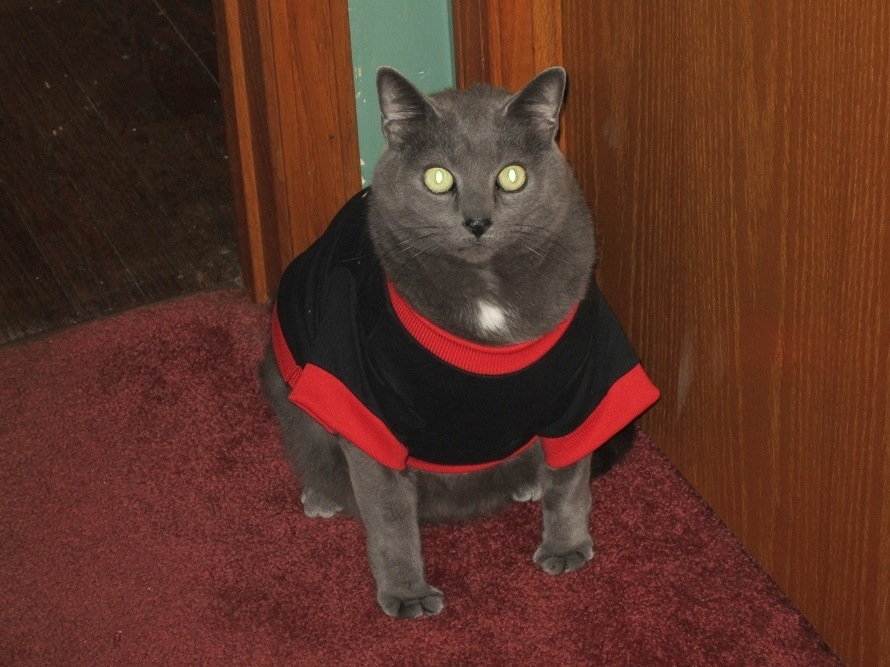 JASPER- OUR 21 lb. CAT by conniemacerol