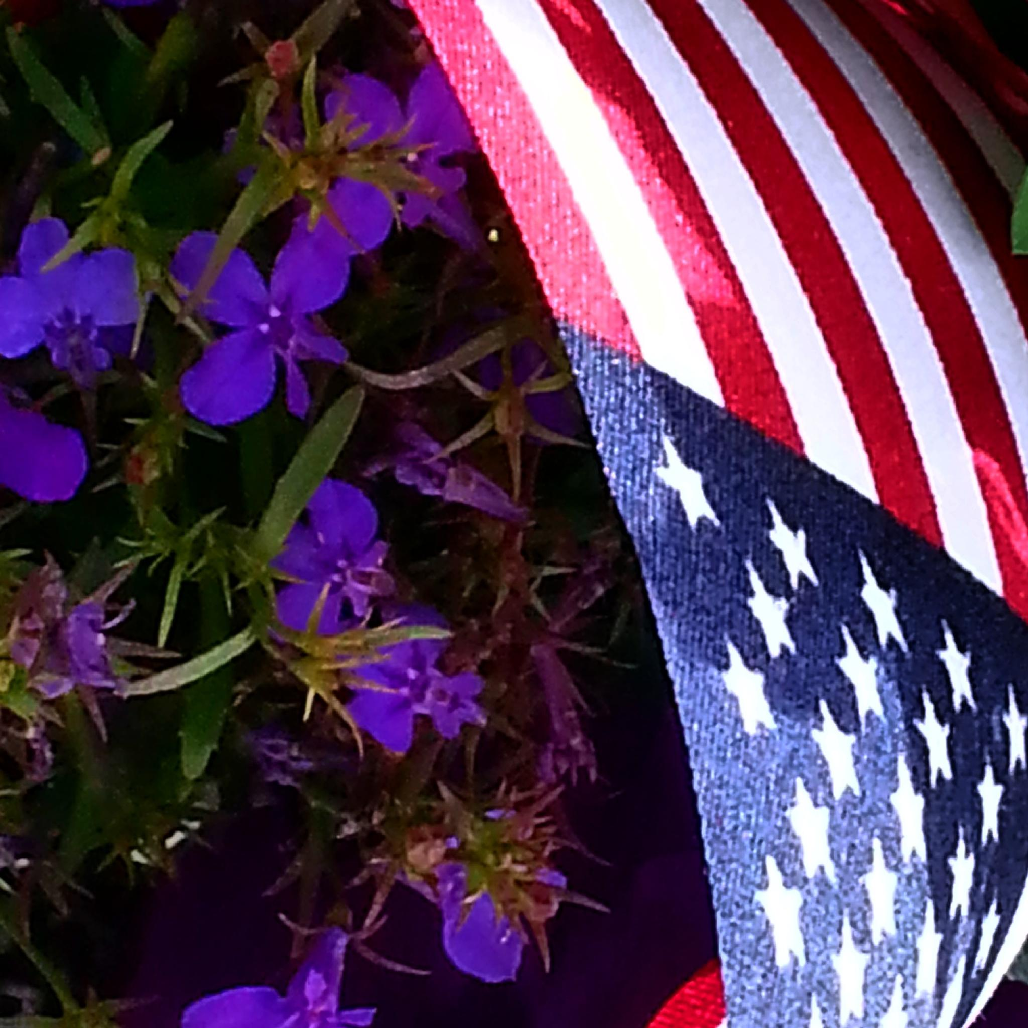 America  by dgreenfrog