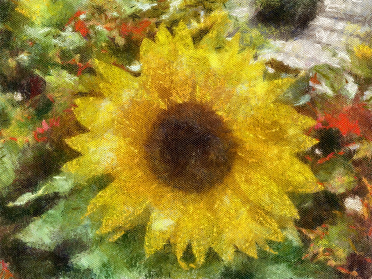 Sunflower by Peter McCormack