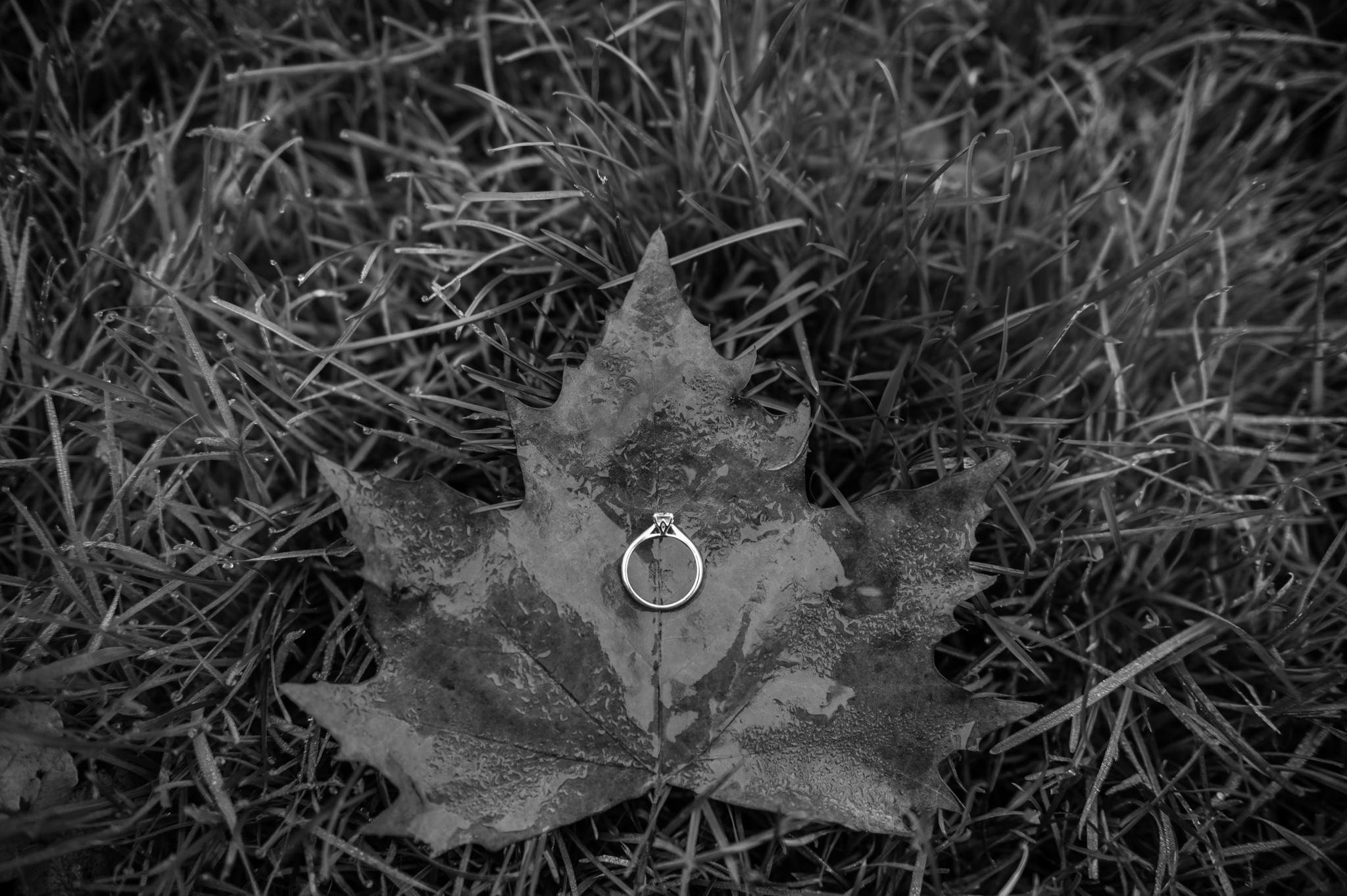 the ring by matteolomonte