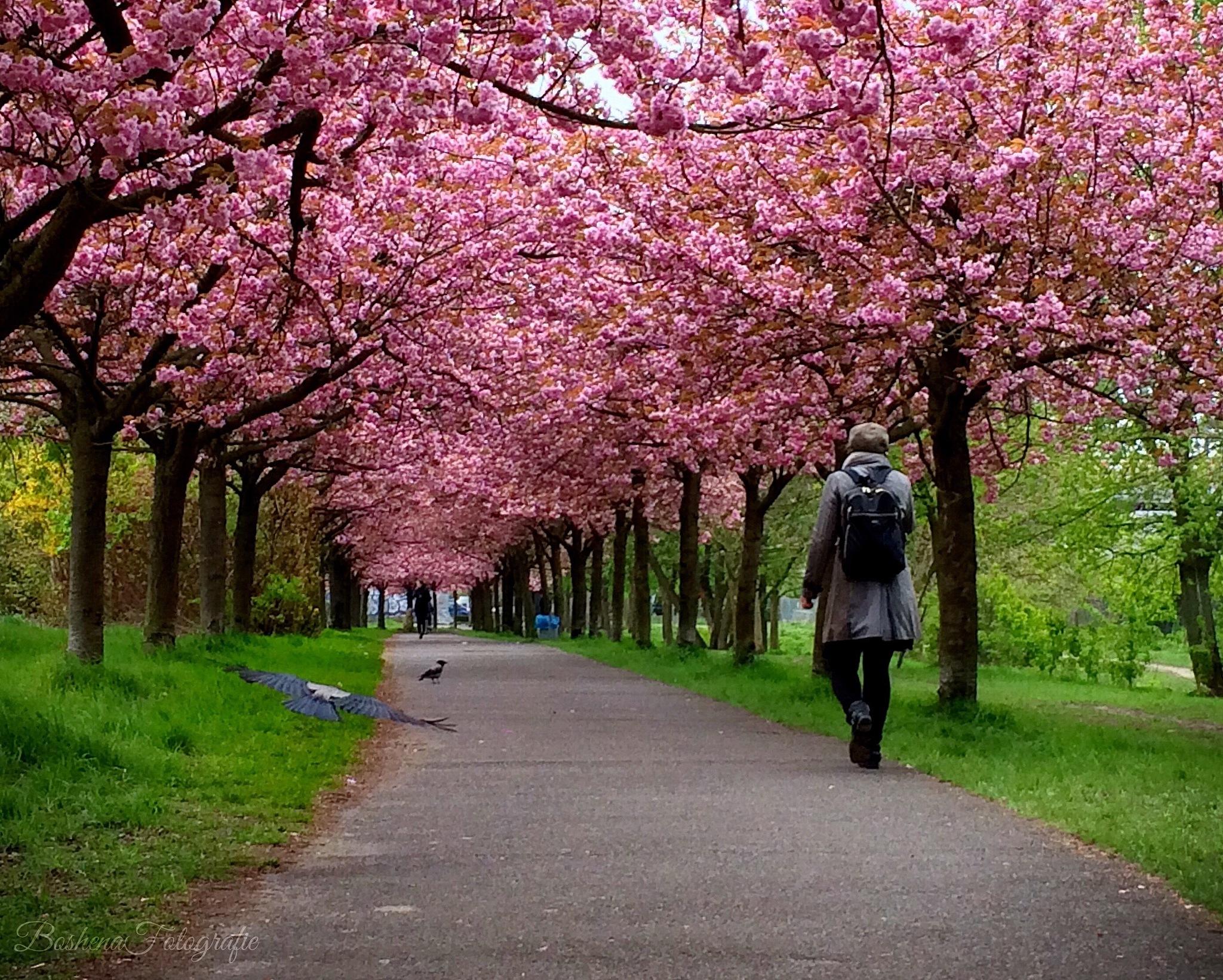 Berlin blossom by BoshenaFotografie