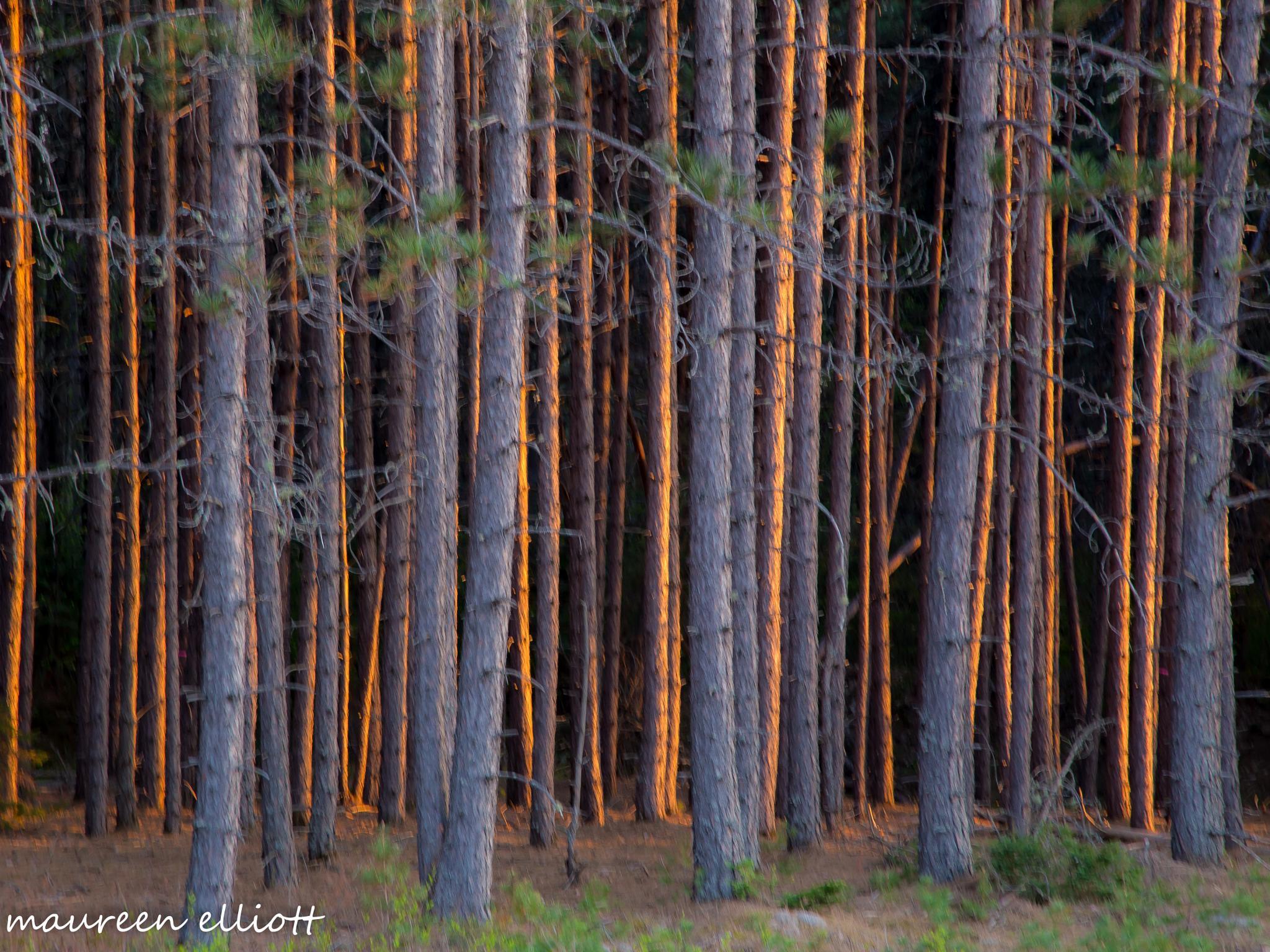Trees In Fire by maureen.elliott317