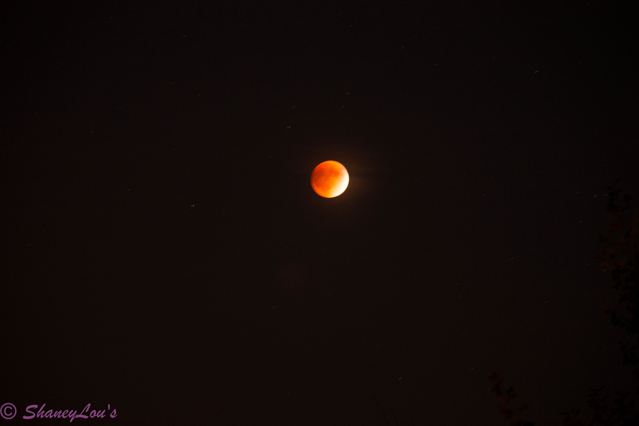 Blood Moon 2015 by Pam Rothe