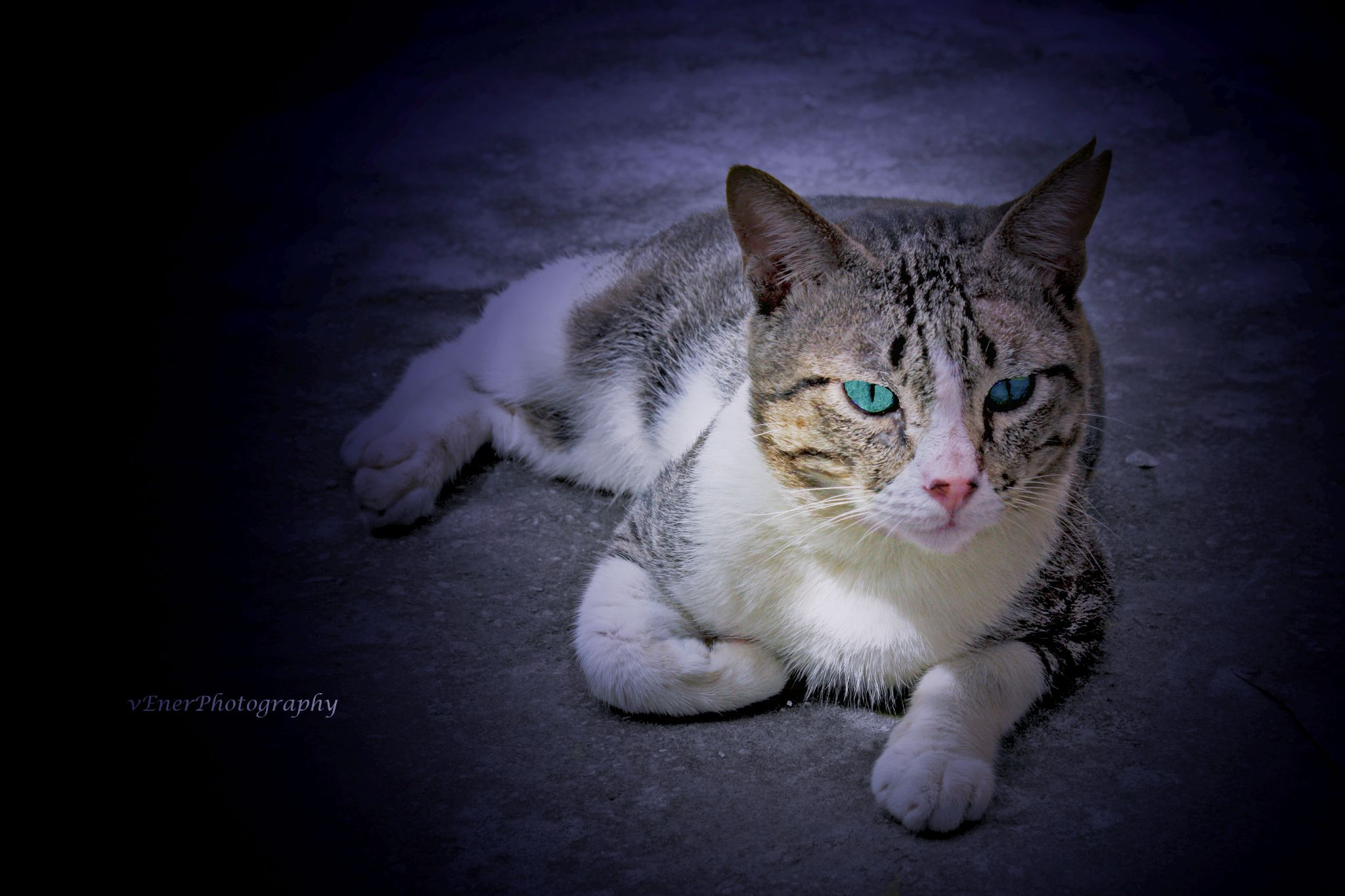 "My Pet ""Ayman"" by lolo1959"