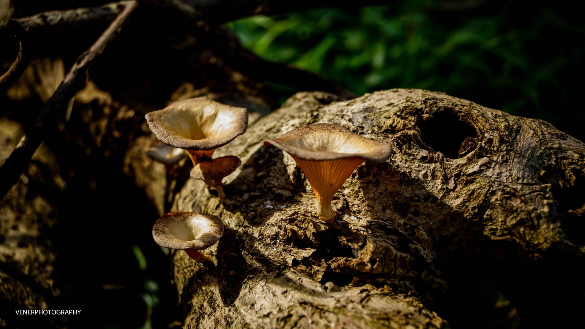 Mushroom by lolo1959