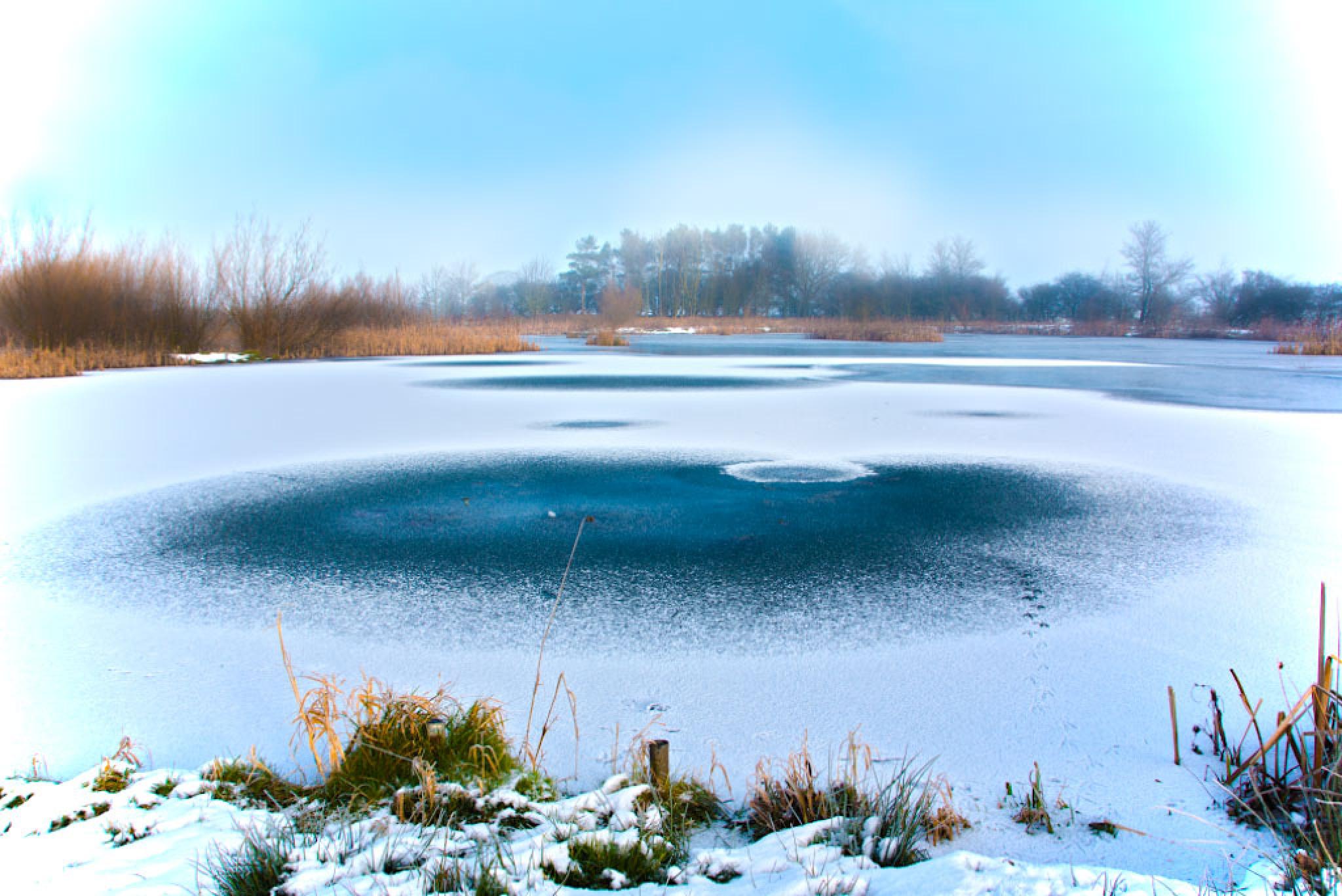 Frozen Ducks ! by jamesdawsonstraughan