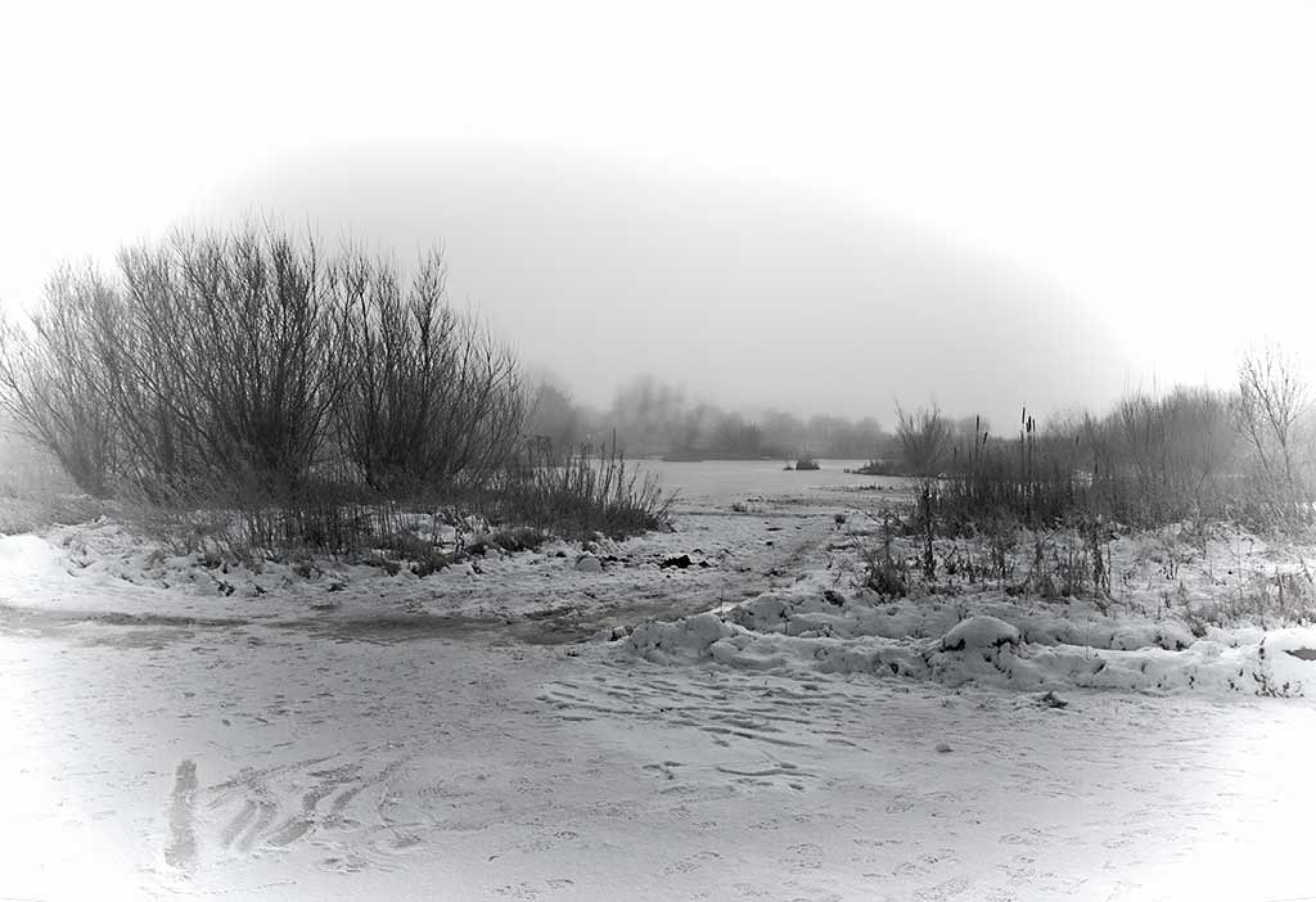 Foggy Day by jamesdawsonstraughan