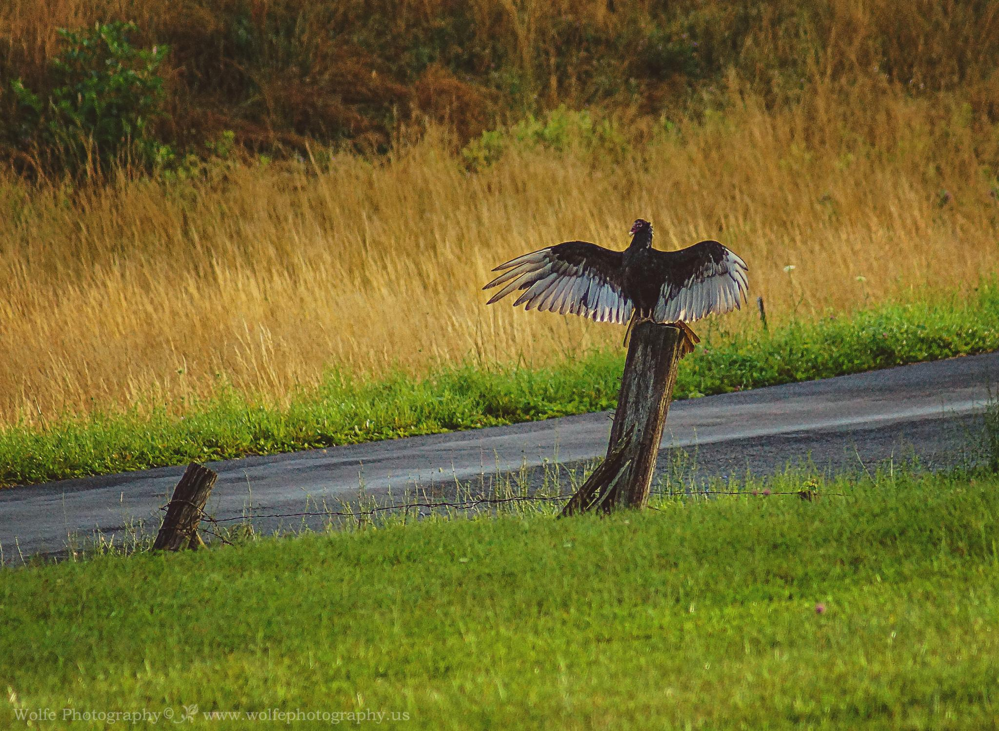 Photo in Nature #virginia photographer #nature #fine art #birds