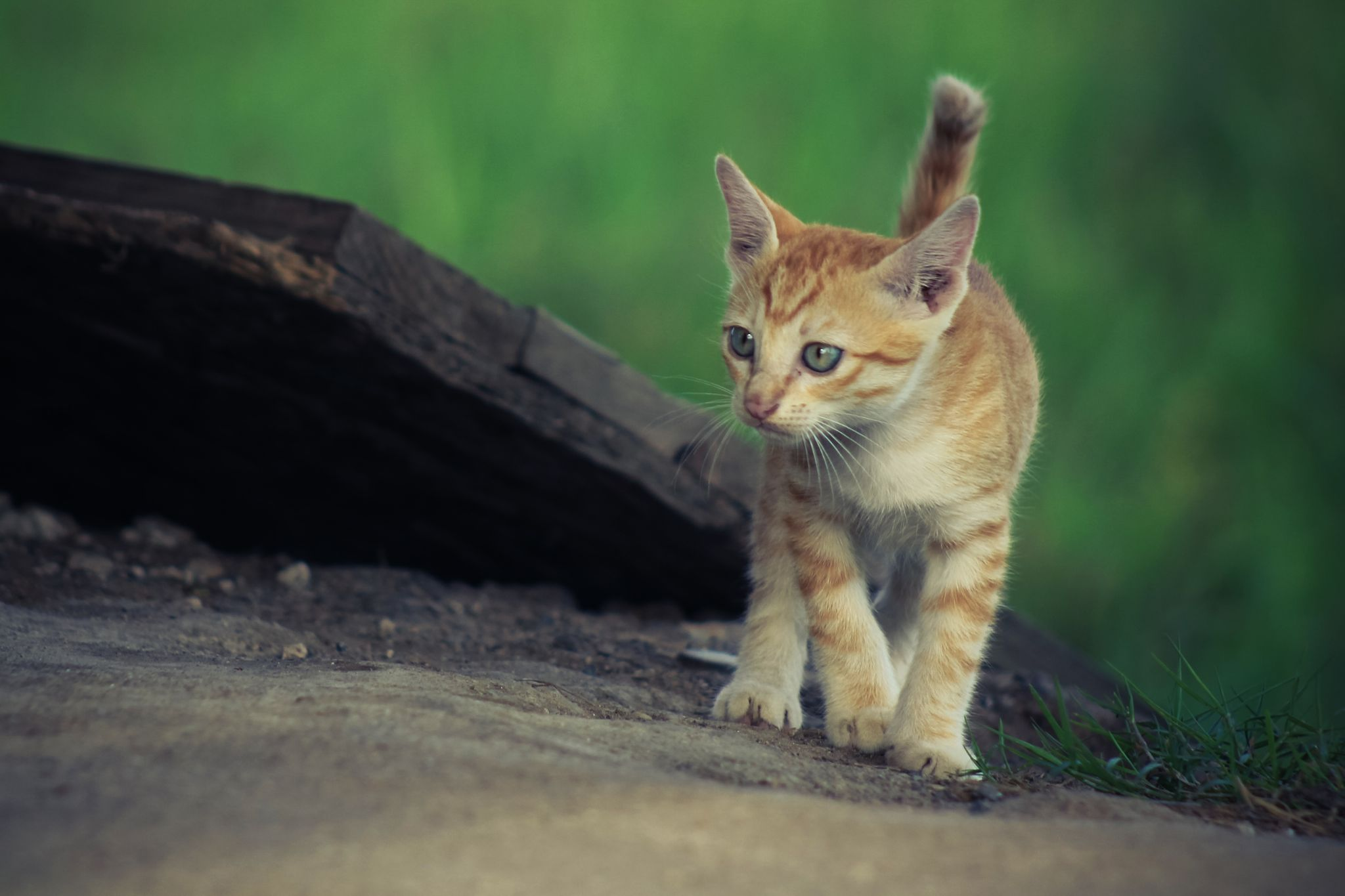 Cat by Nhat giang