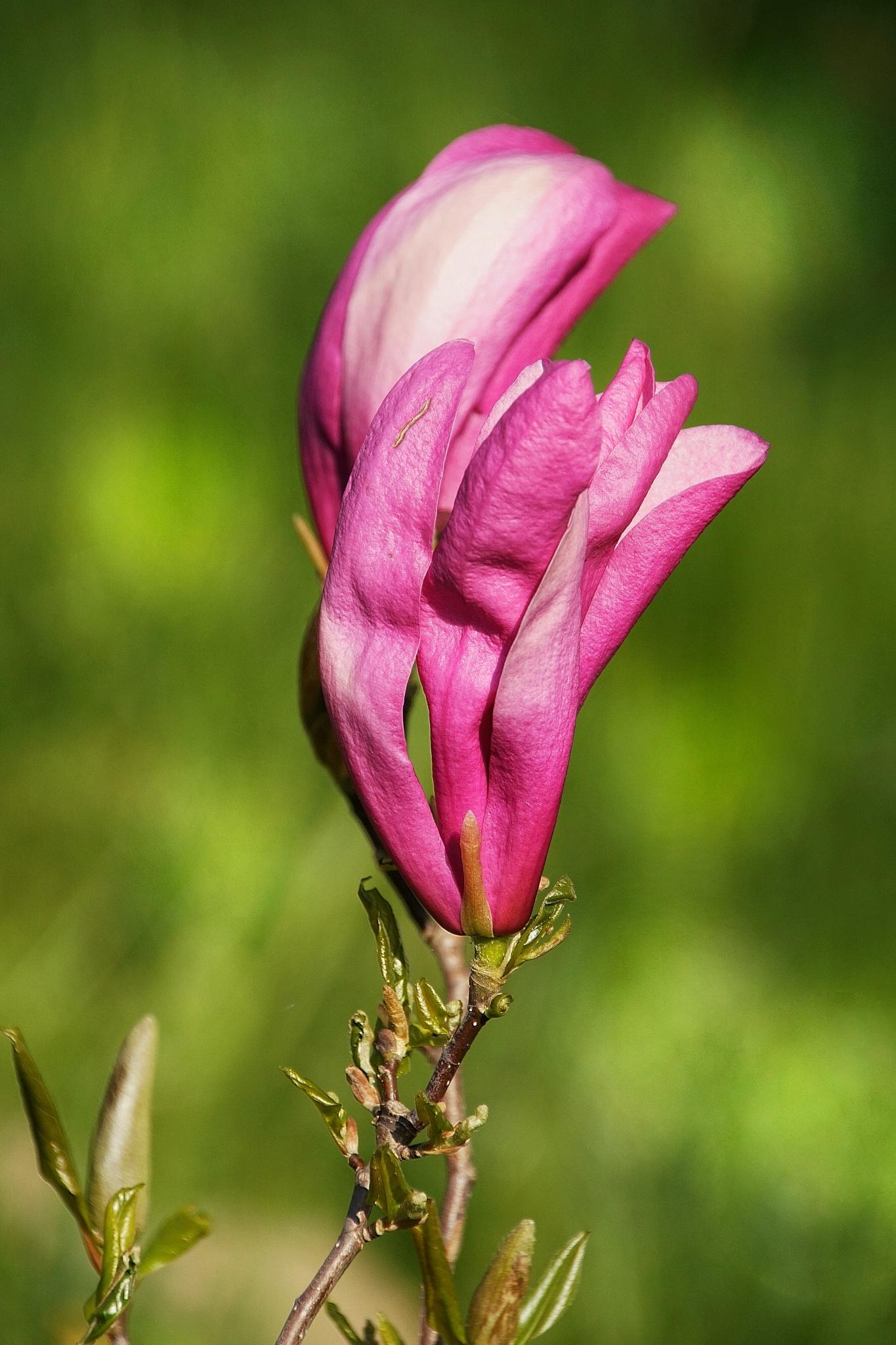 Photo in Macro #plants #flower #flowerphotography #flowers #flora #floral #nature #naturephotography #macro #macros #macrophoto #macrophotography