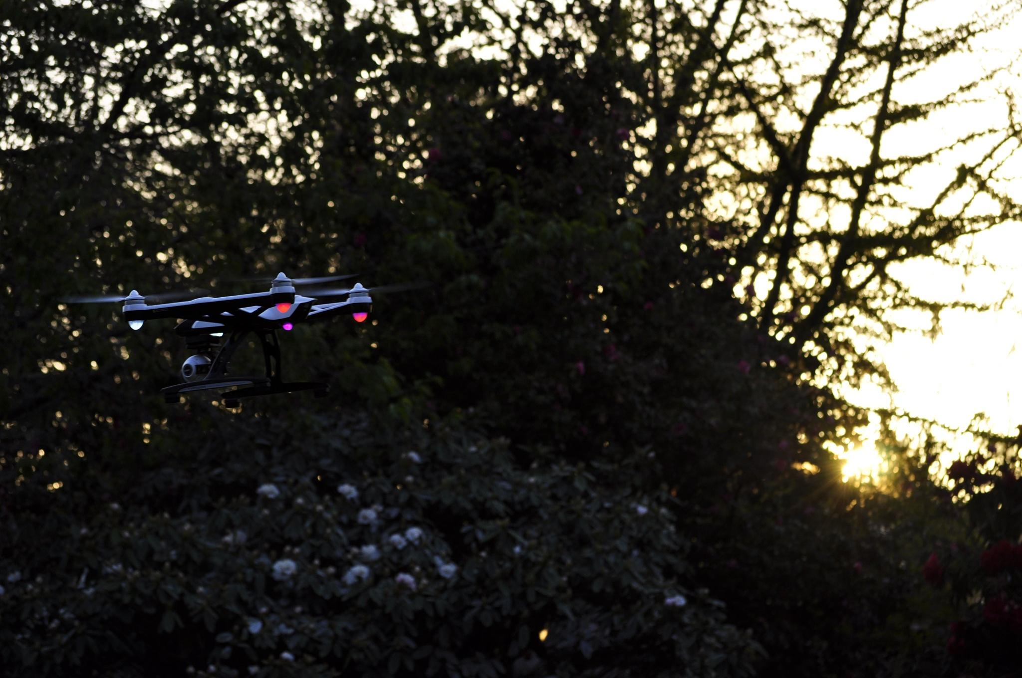 The Drone by Ellen Lauder